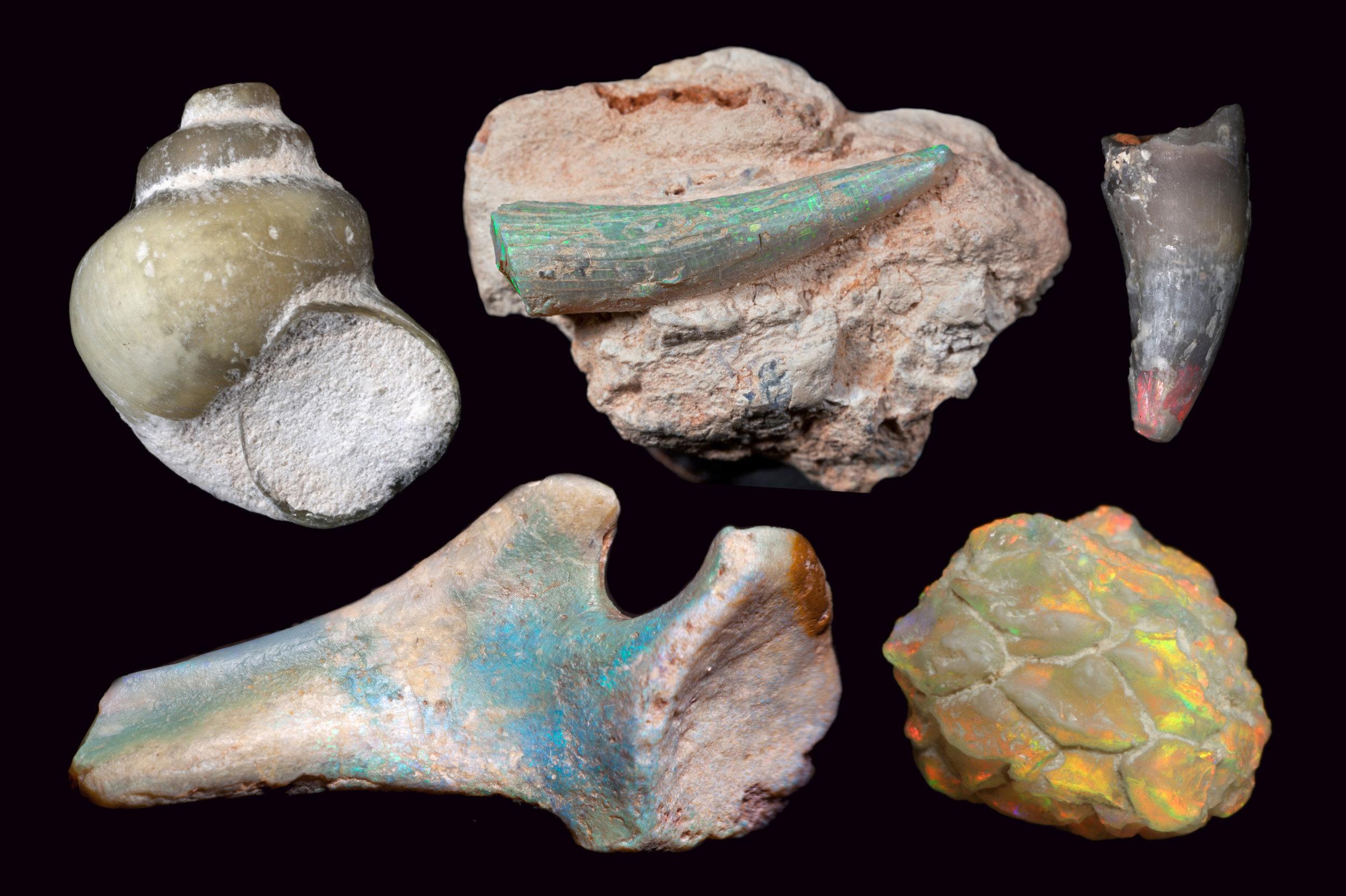 Chasing opal in the Australian Outback, Undark (Image: Robert A. Smith/Jenni Brammall, Australian Opal Centre)