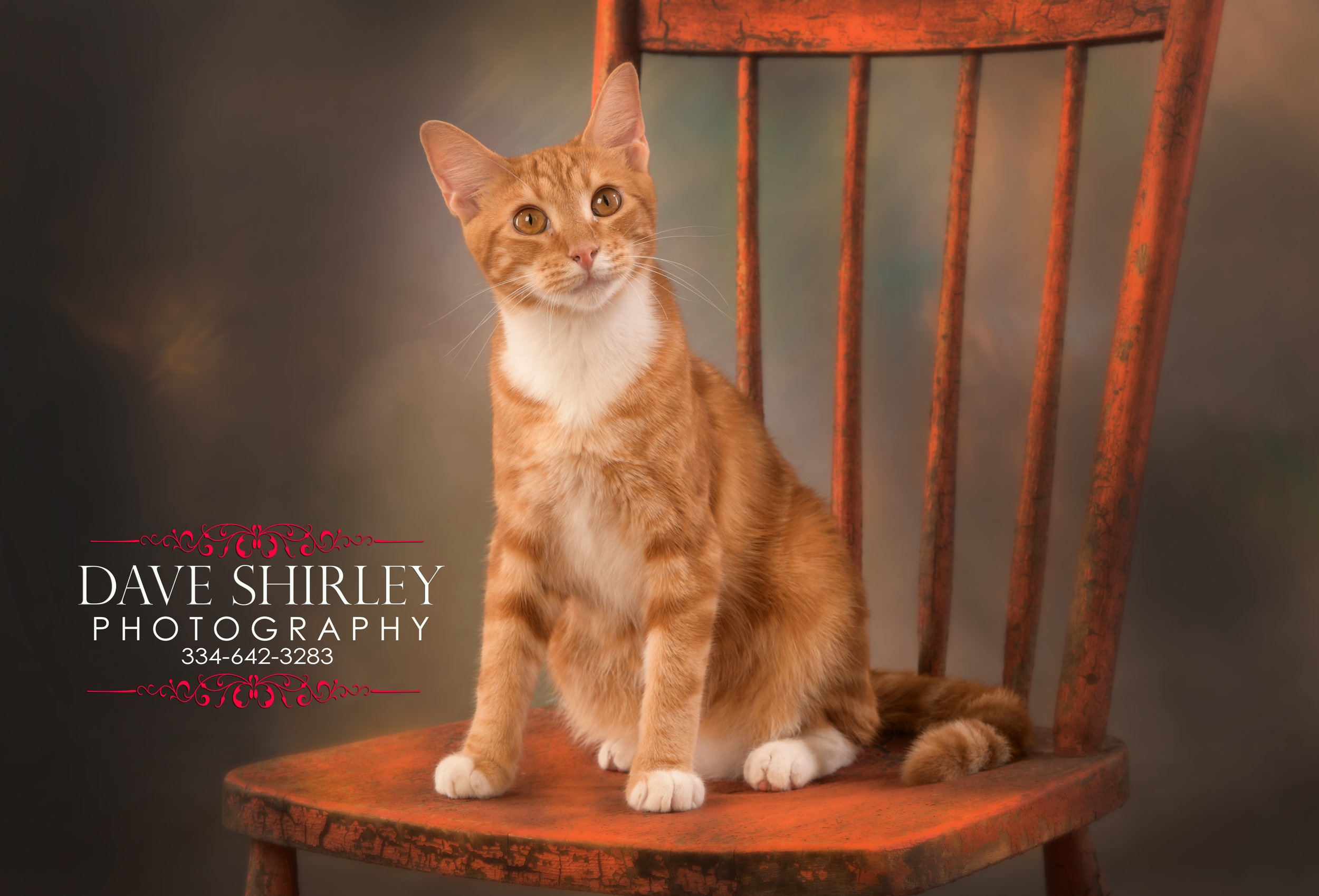 YES We do photograph Pets!!  Here is our new kitten Sunny that we have adopted from our local Animal Shelter.