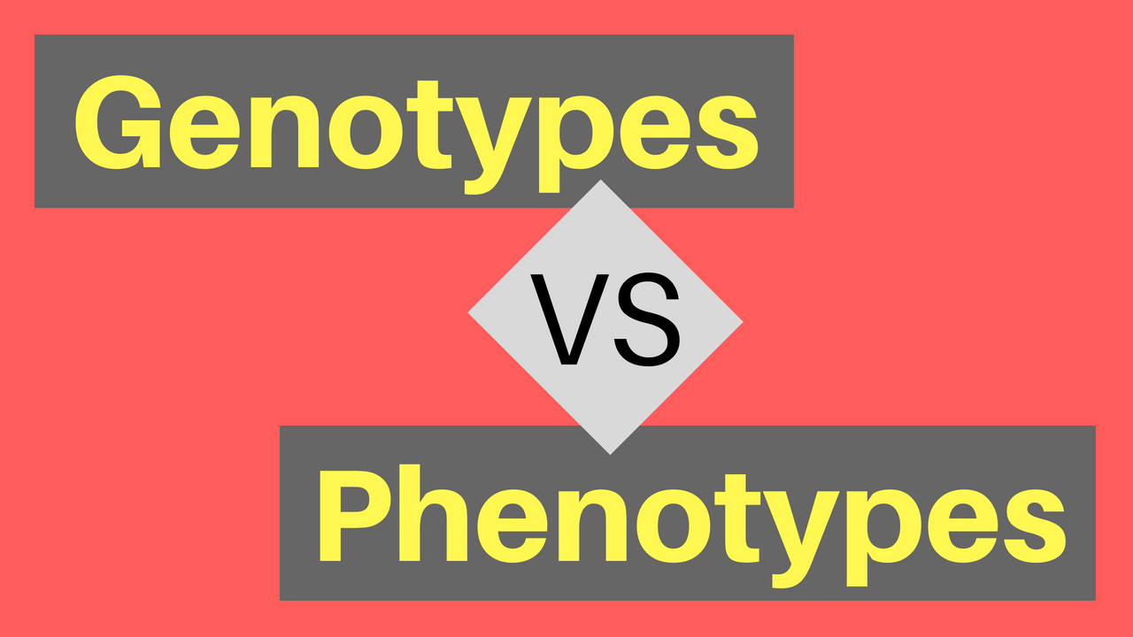 Genotypes vs Phenotypes