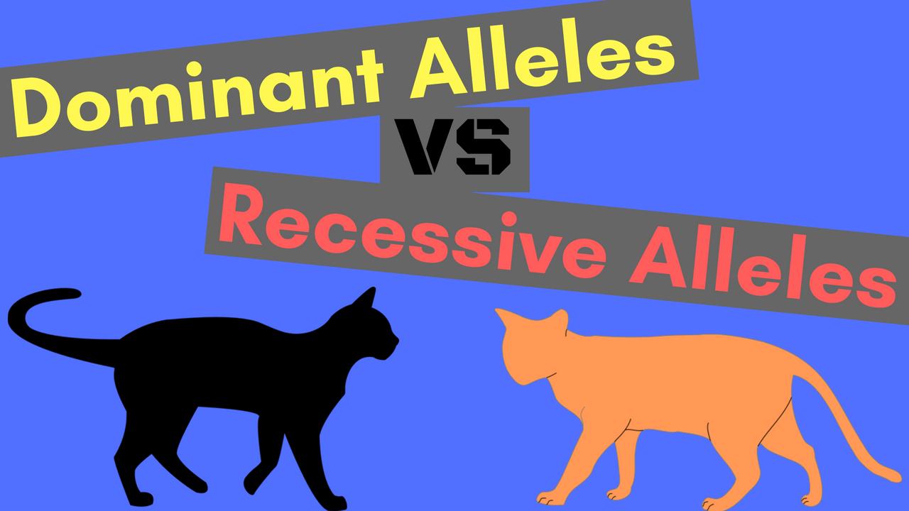 Dominant Alleles vs Recessive Alleles