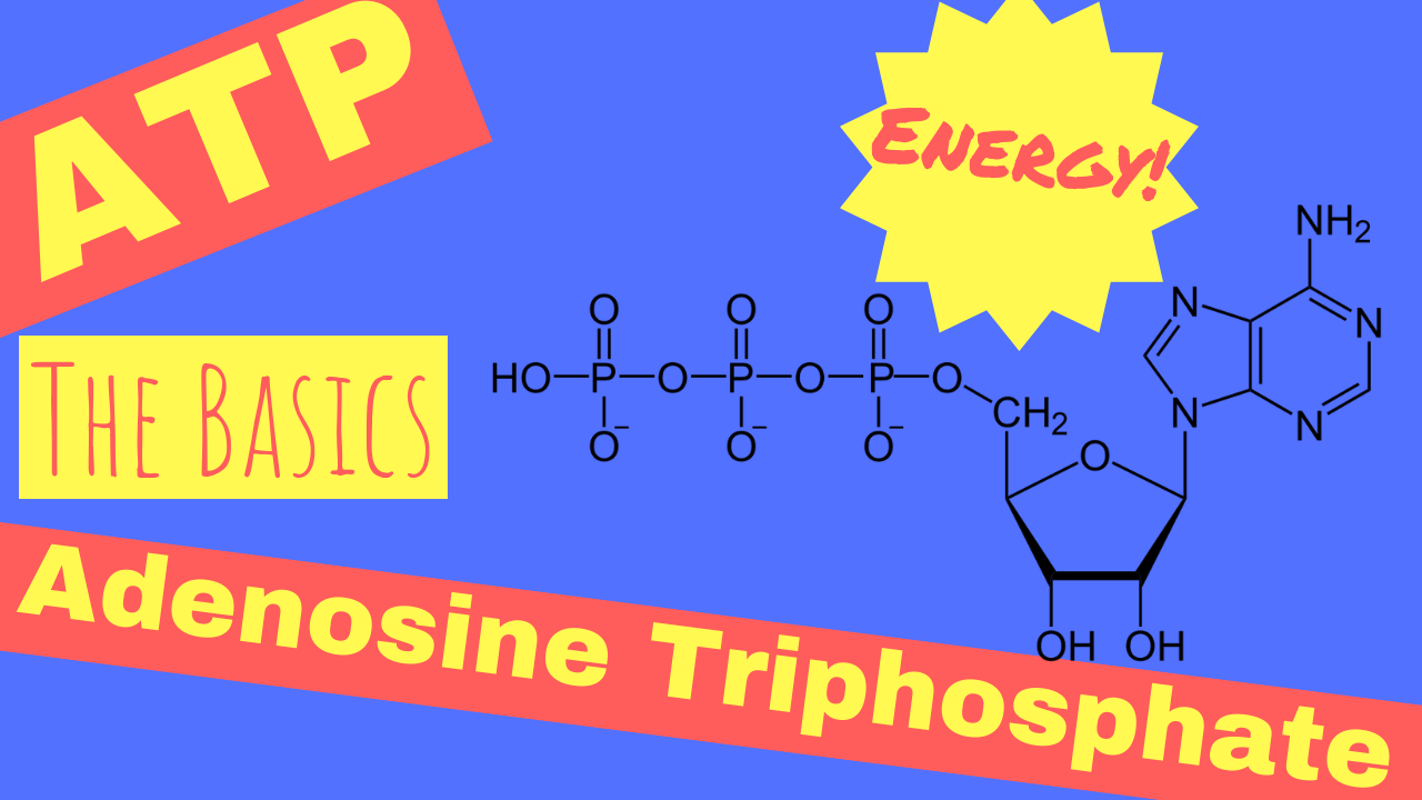 What is ATP | Adenosine Triphosphate