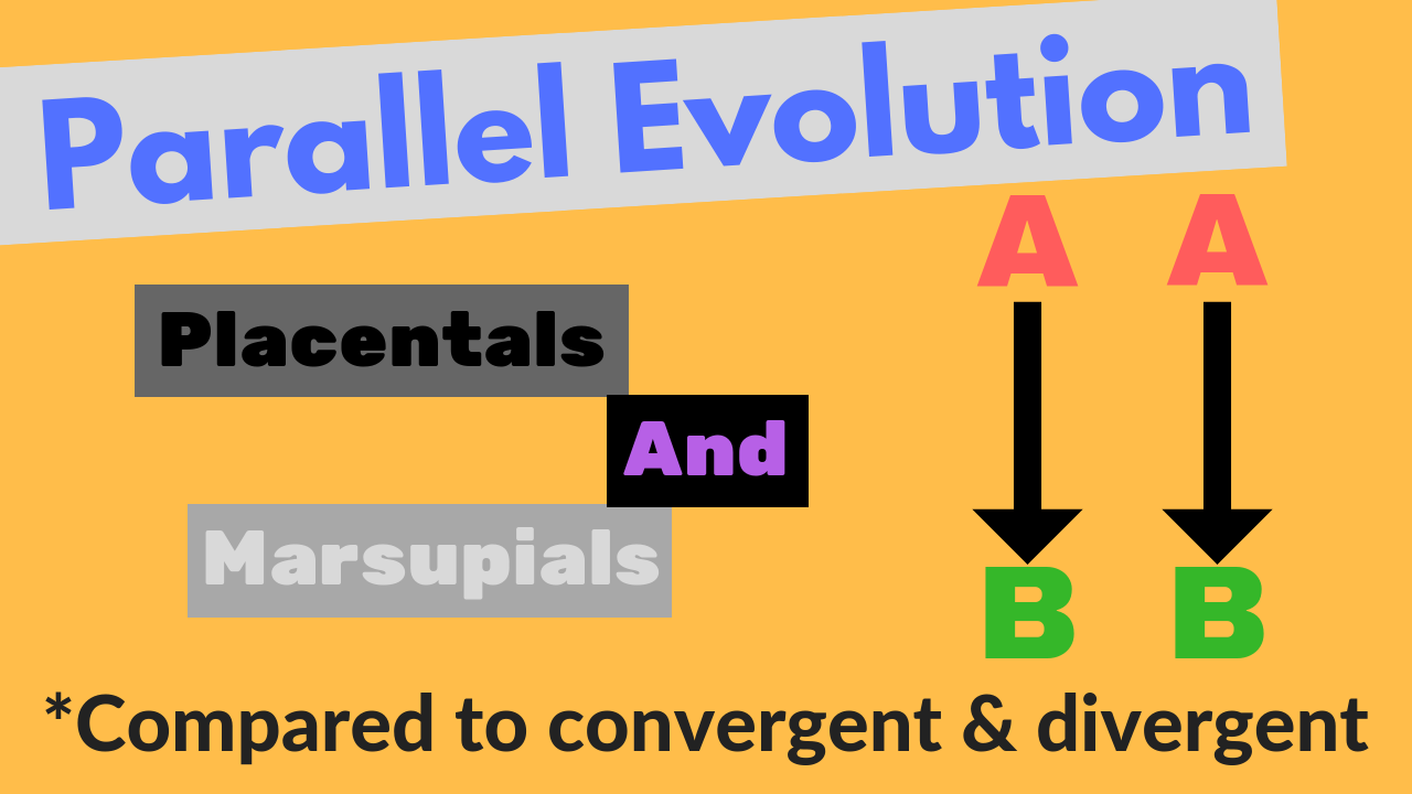 Parallel Evolution