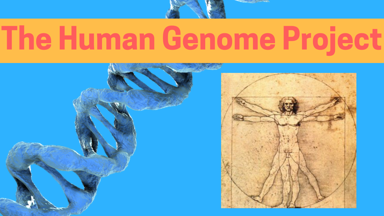 What is the Human Genome Project?