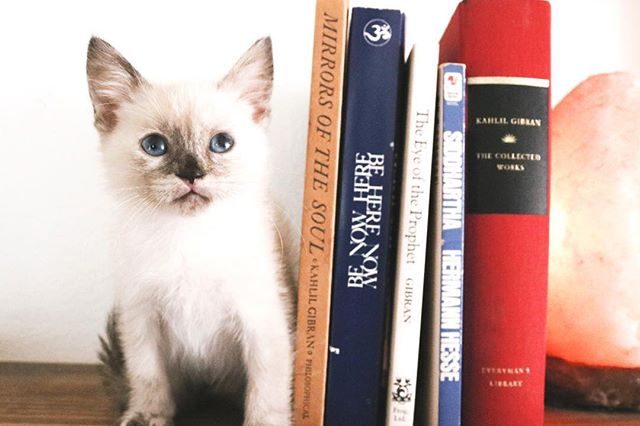 Good books and good kittens make good weekends. Good coffee takes it next level.