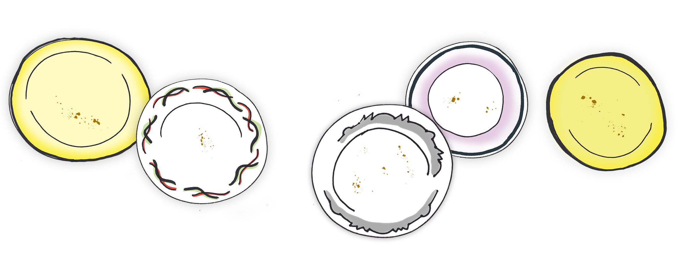Plate line up.jpg
