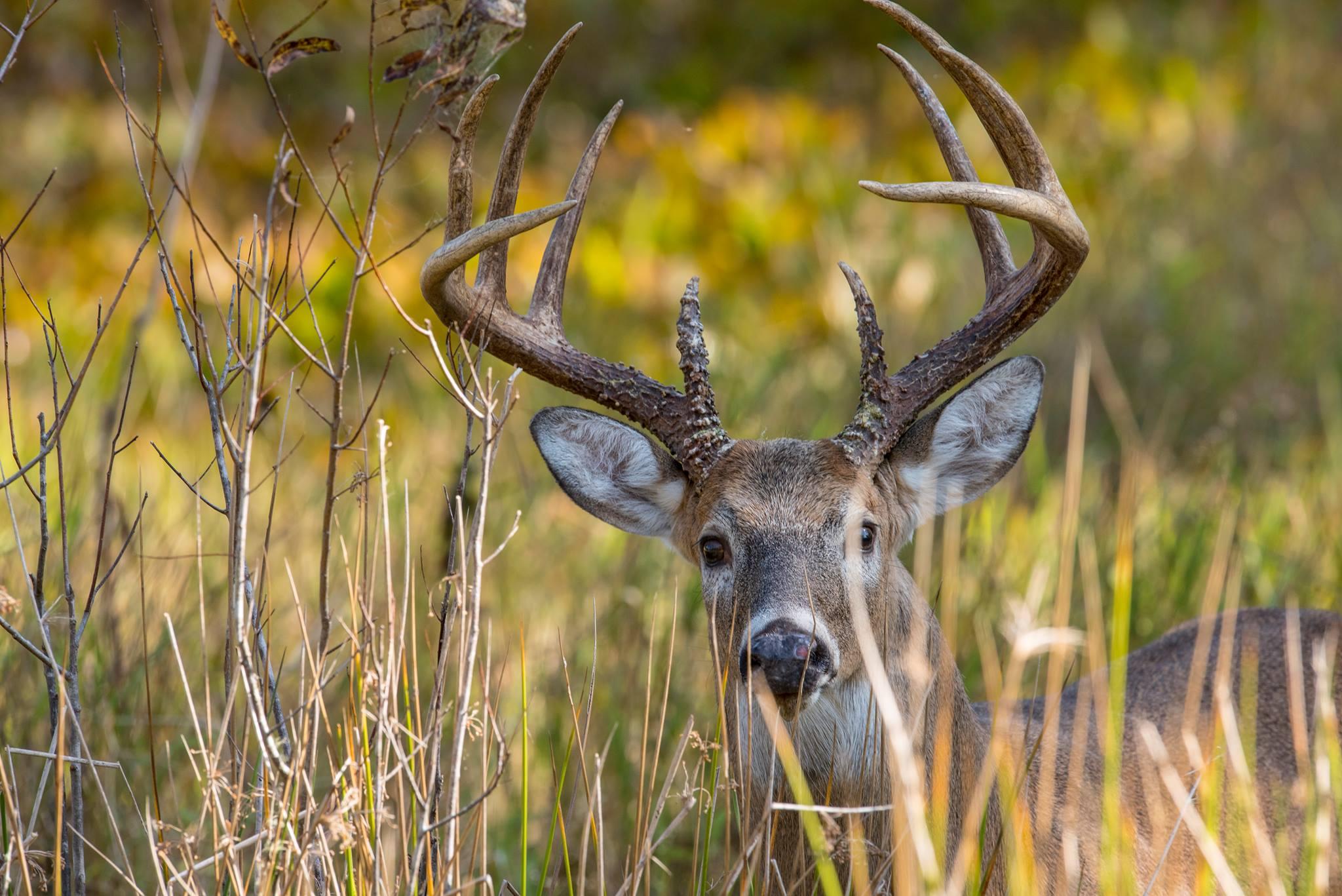 FL Deer 2.jpg