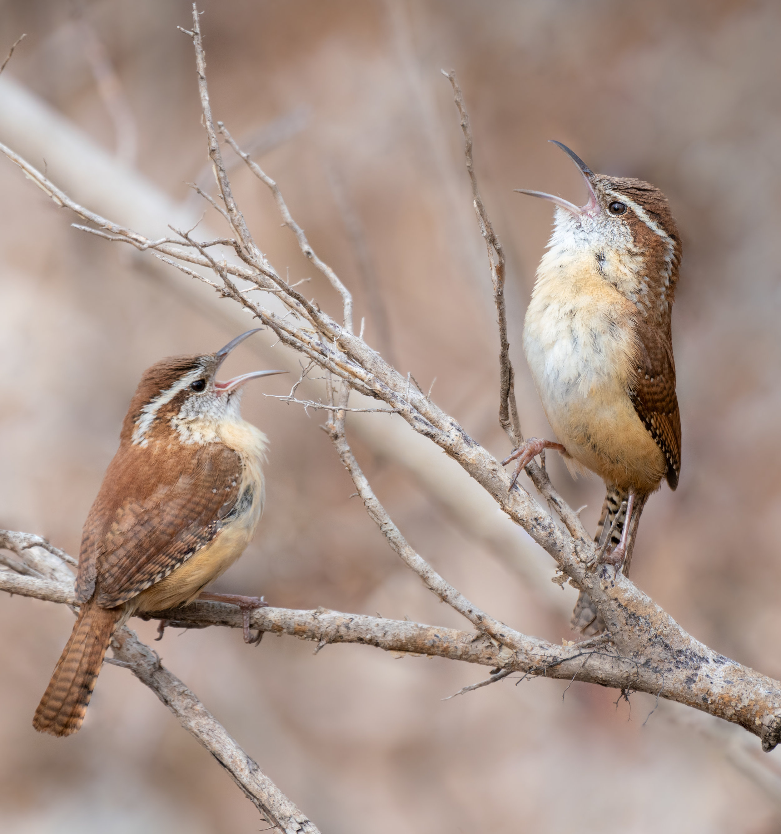 Singing Pair