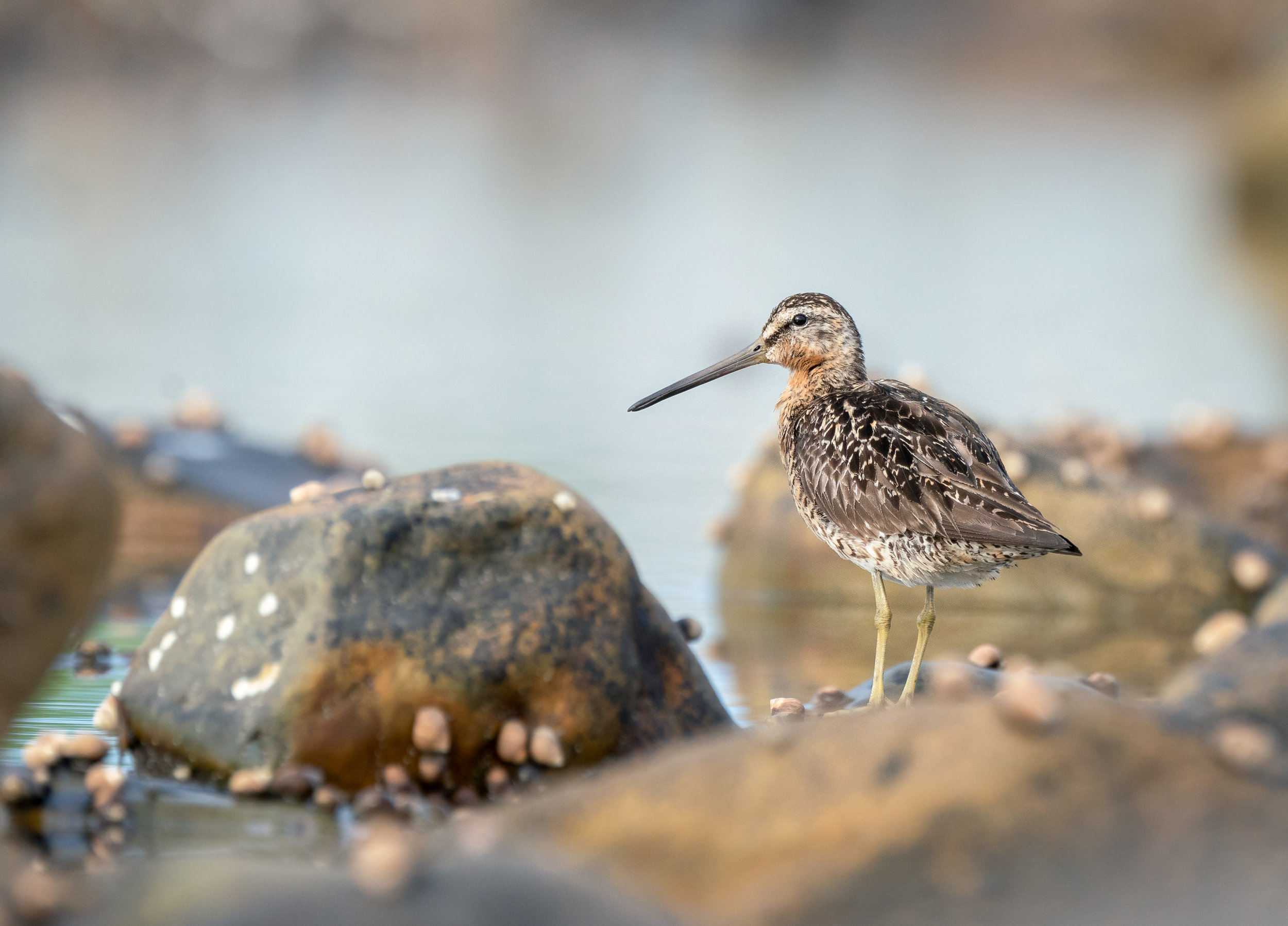 The most difficult to shoot - skittish, rocks and ponds near the tide