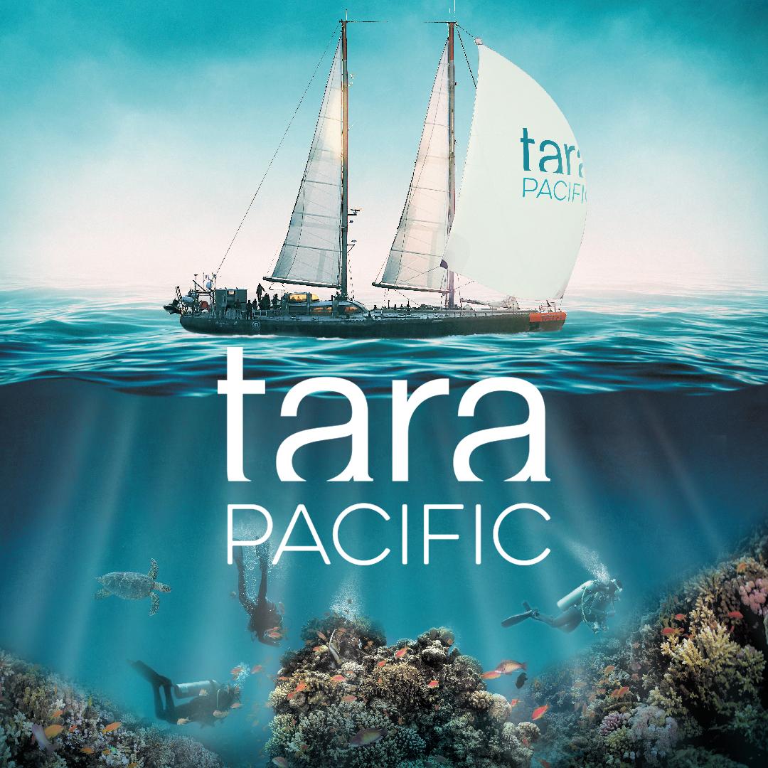 Tara Pacific Coral Bioinformatics