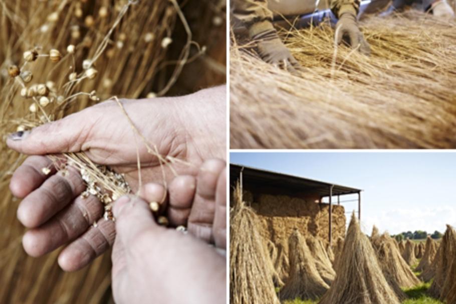 Linen plant harvesting