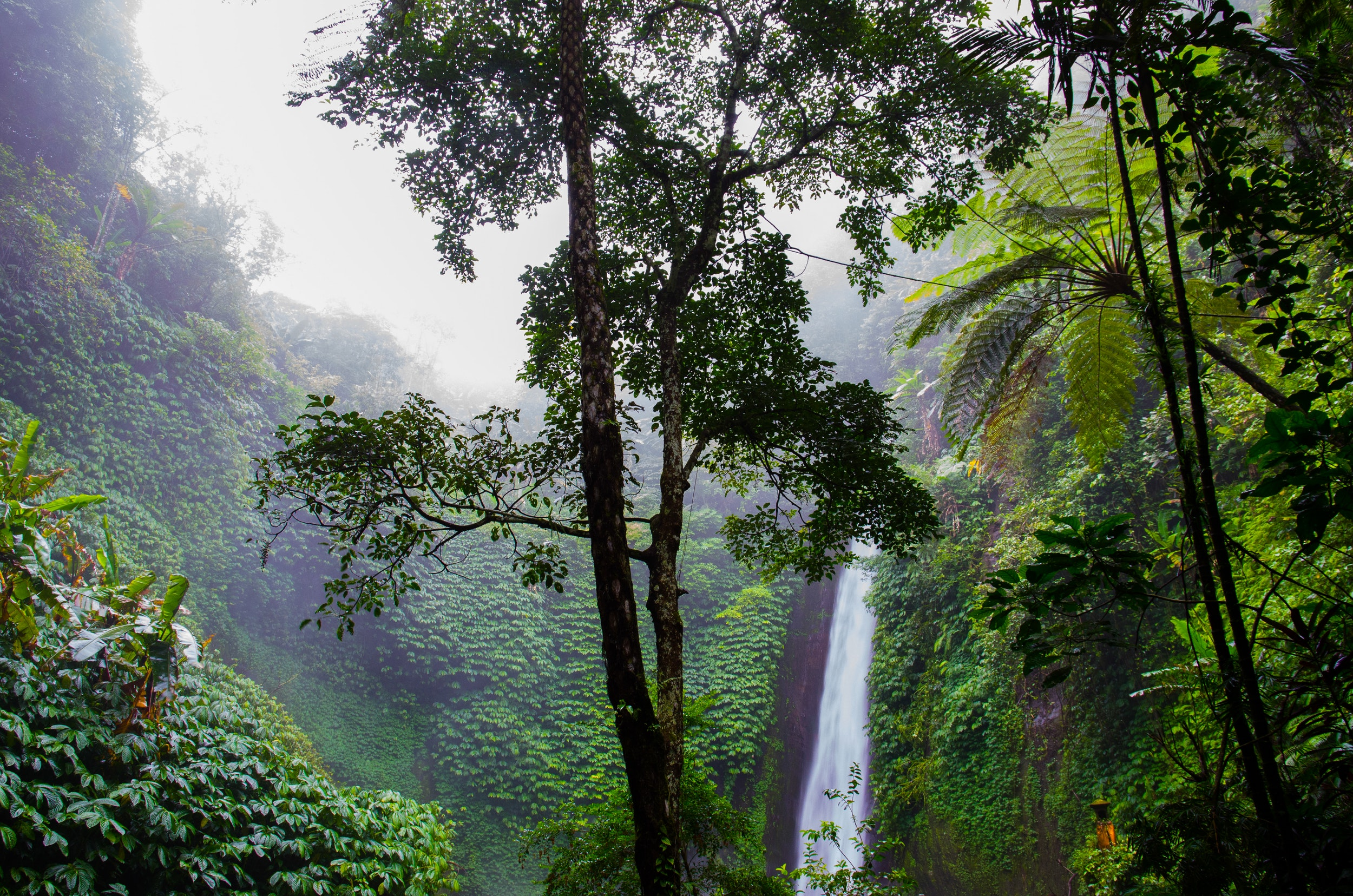 nature-forest-waterfall-jungle.jpg