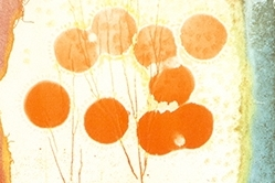 new-york-school-of-the-arts-taka-maruno-printmaking2.jpg