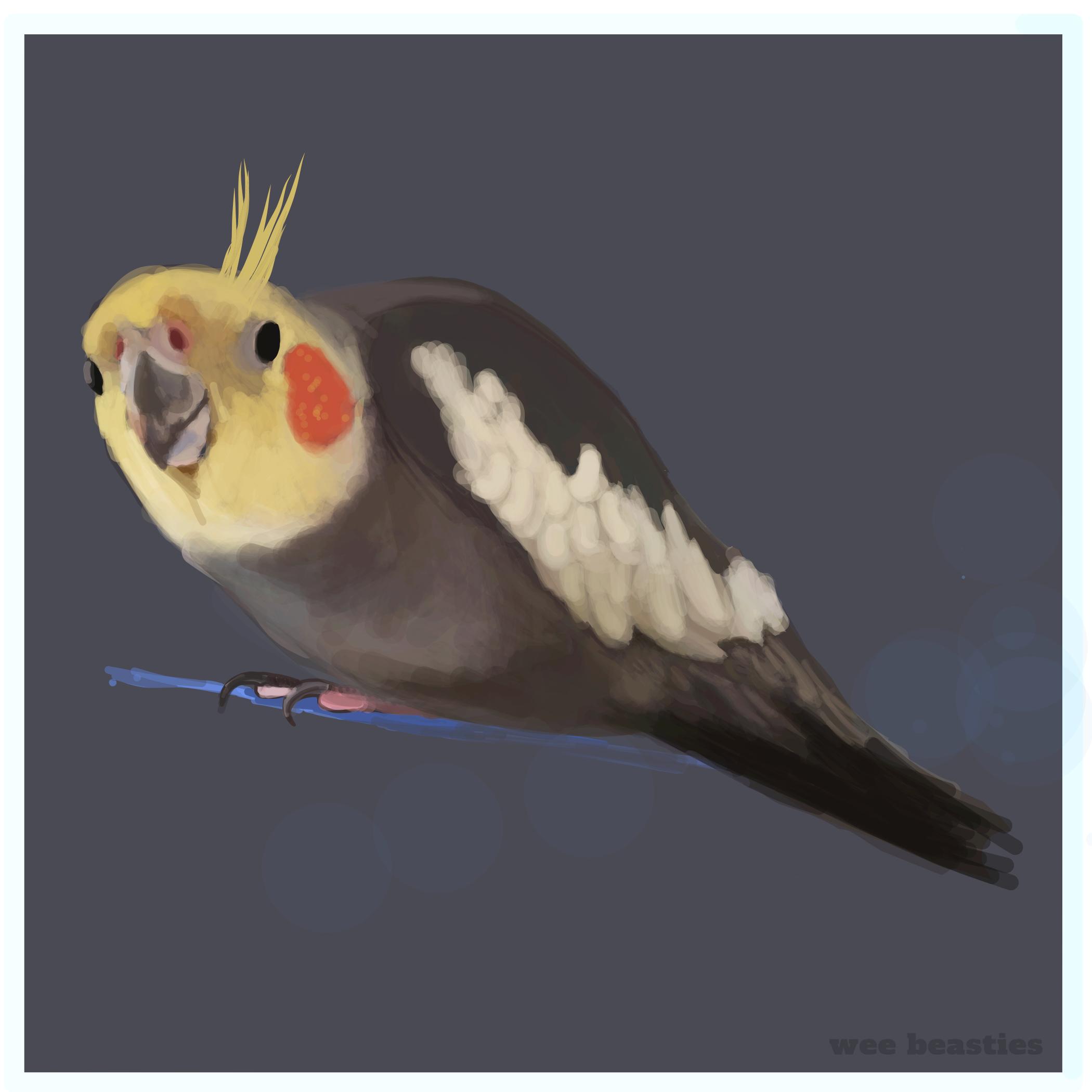 Cockatiel.jpg