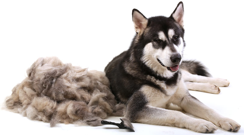 pet-grooming-reduces-shedding.jpg