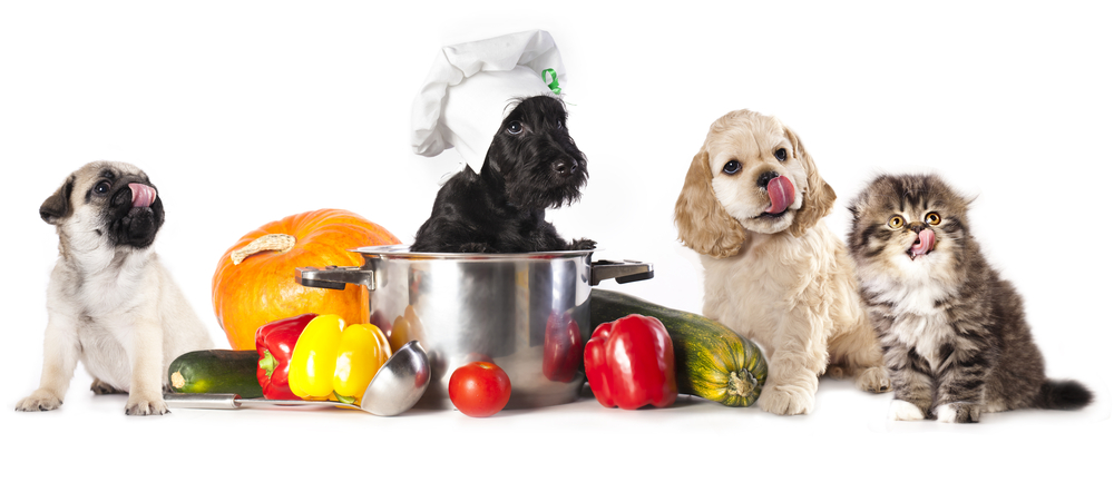 dogs-and-cats-healthy-pet-food.jpg