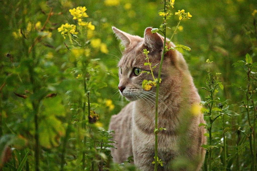 cat-in-wildflowers.jpg