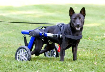 Photo Credit: Handicapped Pets