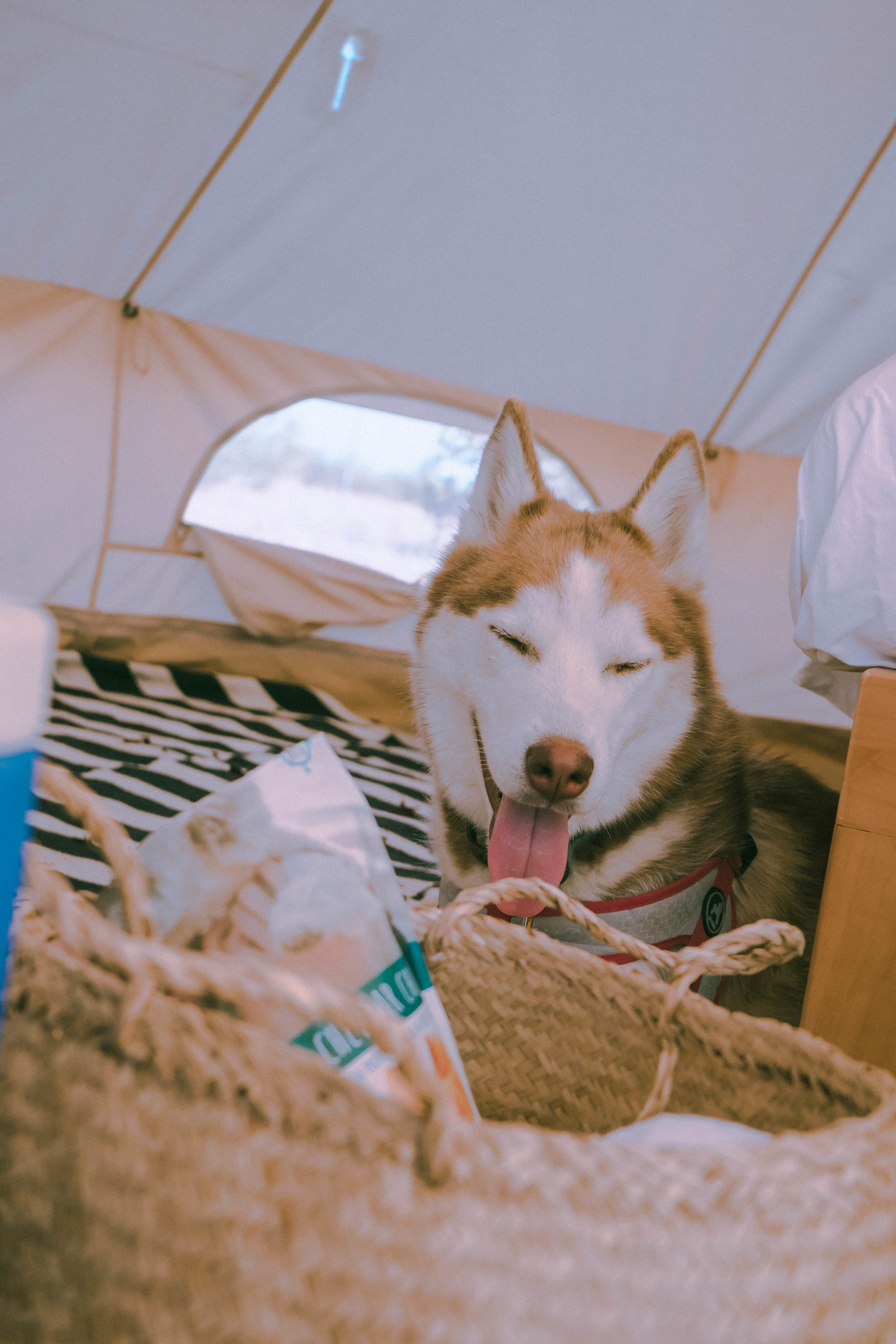 Max was very cozy sleeping in here during the cold desert nights