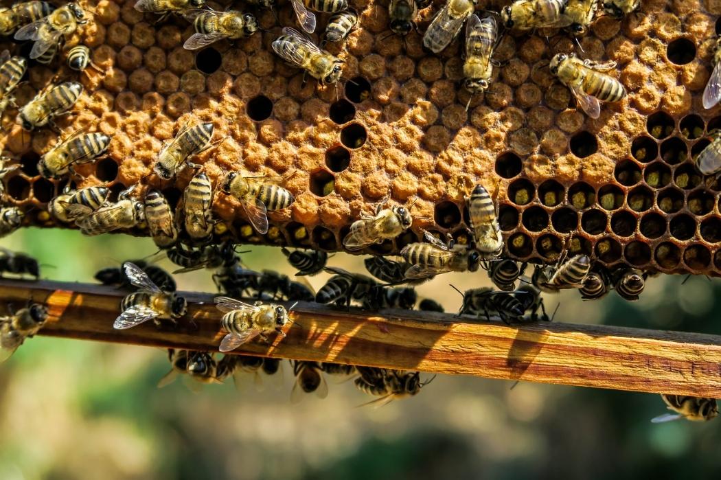 4. Beekeeping -
