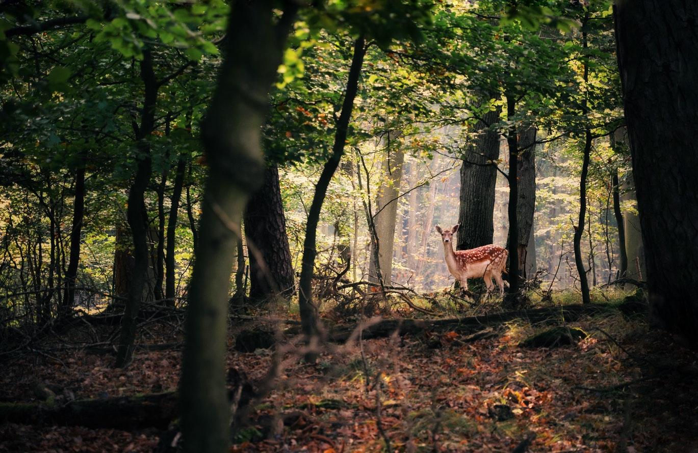44. Wildlife Preservation -