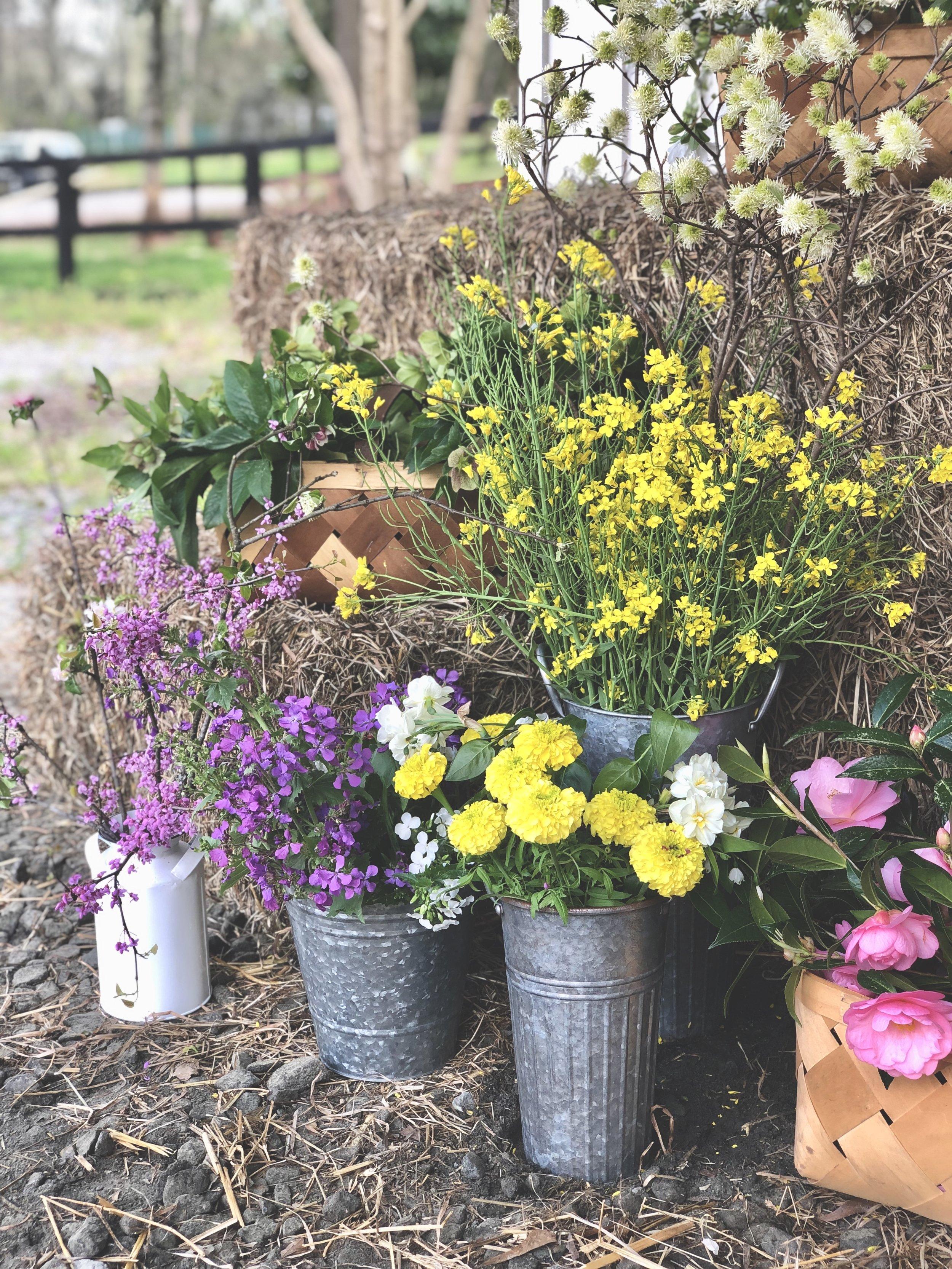 First Flowers.jpg