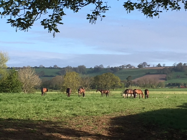 Horses in the sunshine.JPG