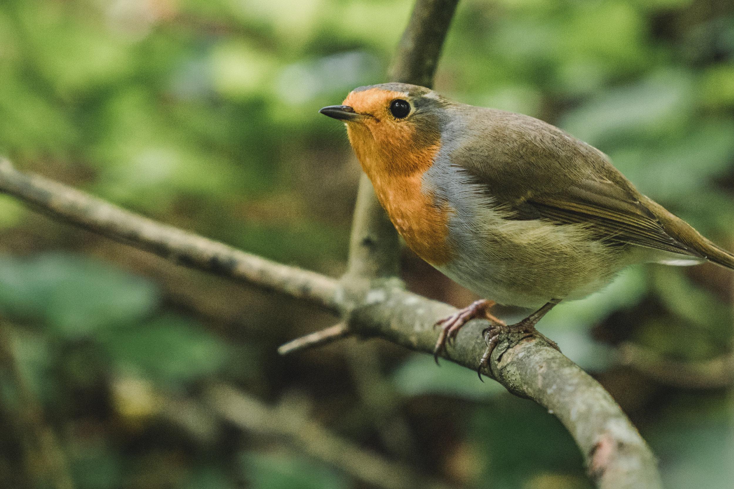 The happy bird