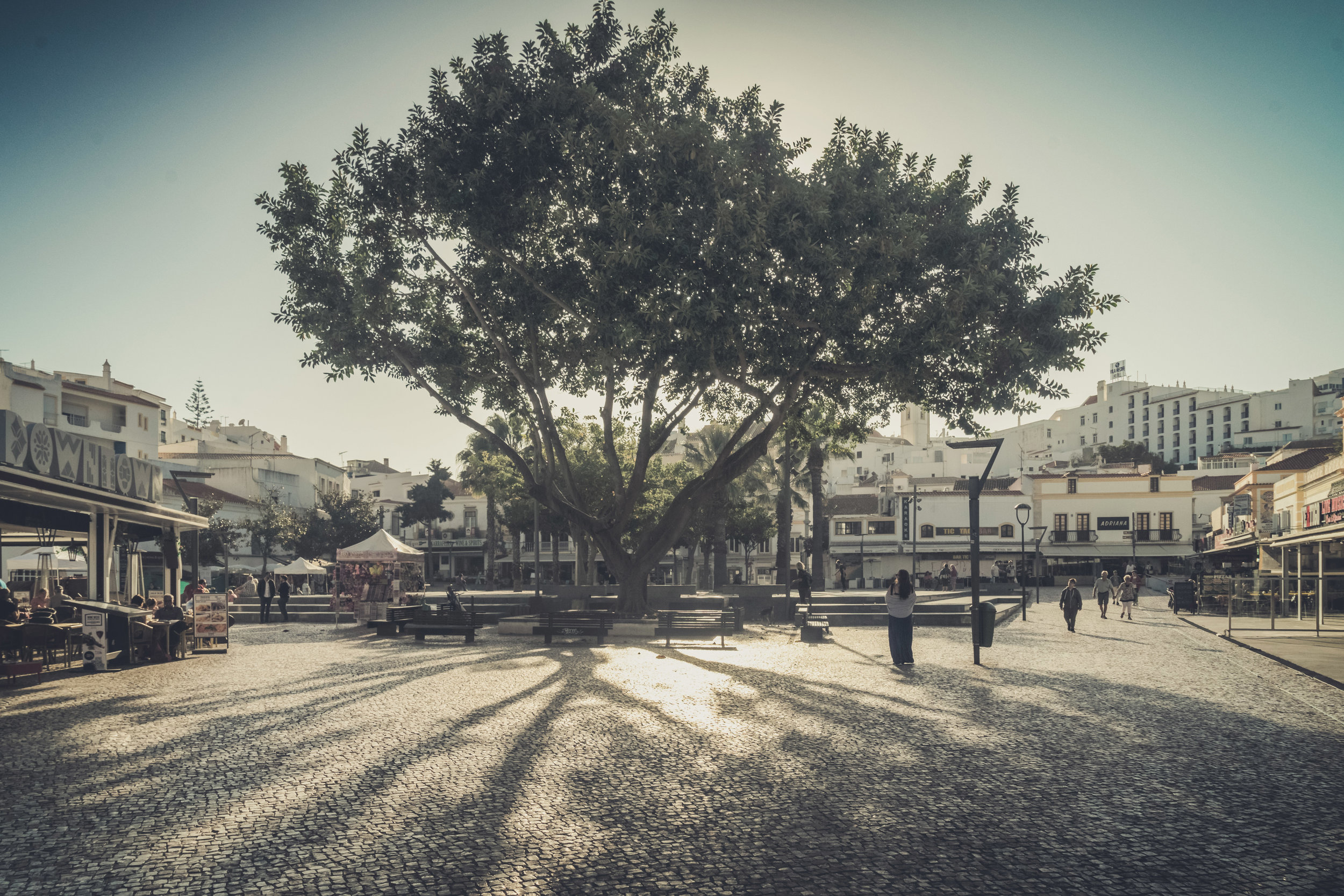 albufeira town center. big tree in the middle of albufeira. old albufeira..jpg