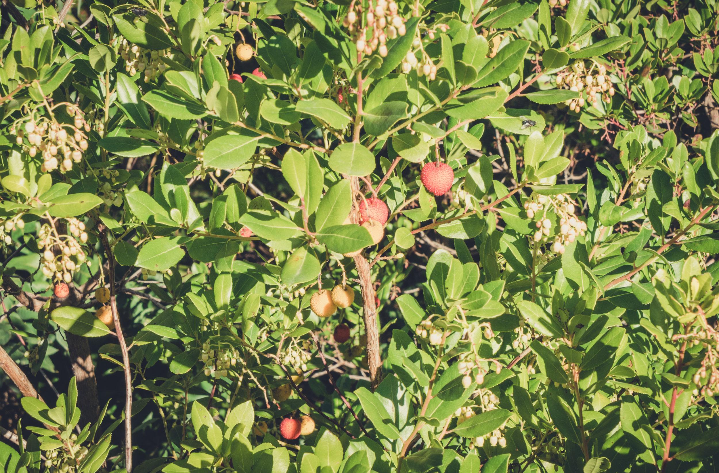 monchique portugal. roadside fruit monchique. stopping to see the fruit. monchique hills.jpg