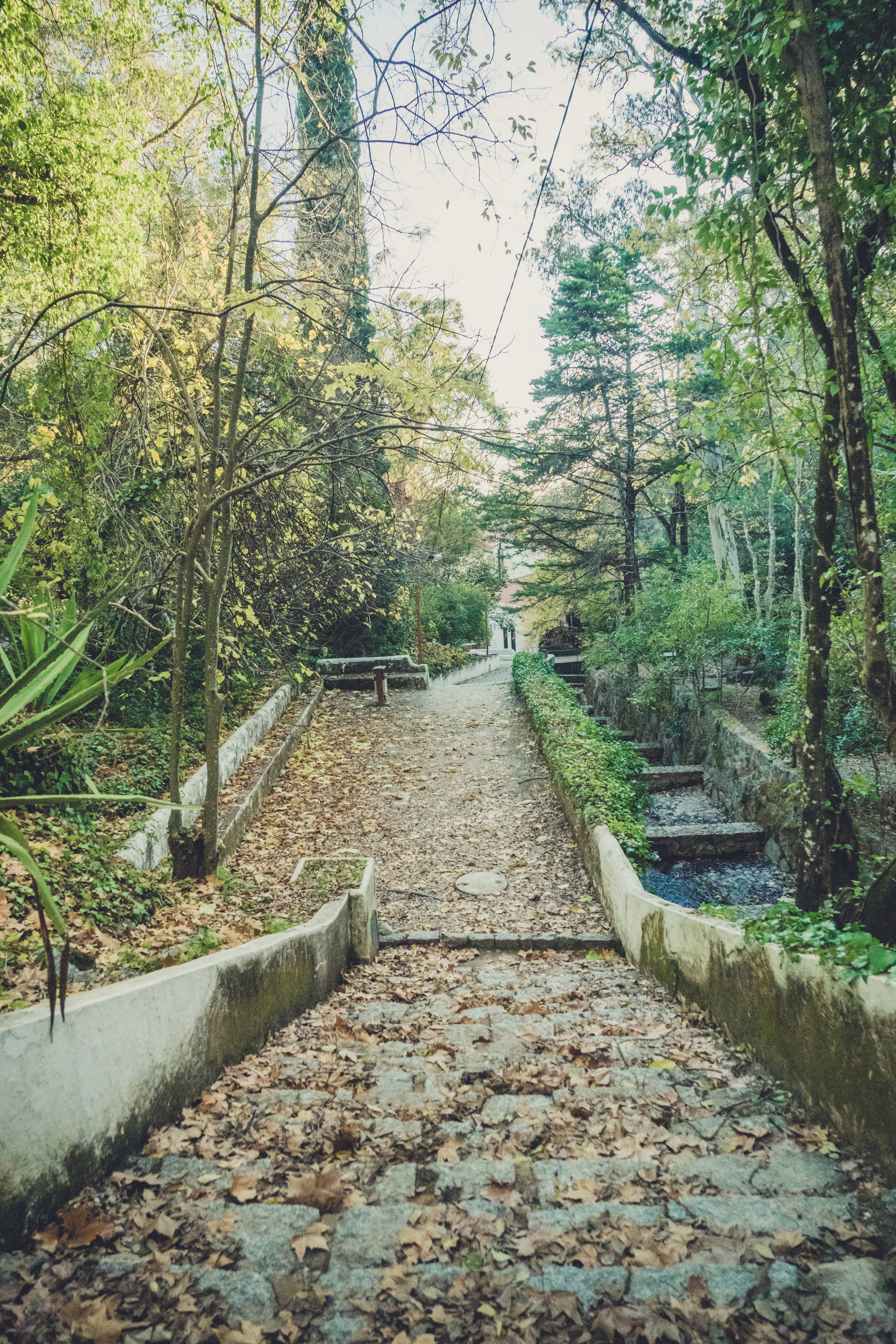 caldas de monchique portugal. walking through the forest. walking through the grounds of the spa. lovely setting. cobble path.jpg