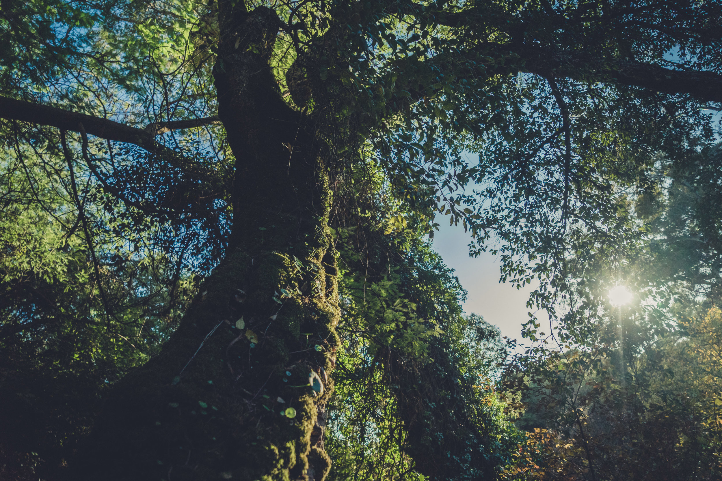caldas de monchique portugal. walking through the forest. walking through the grounds of the spa. lovely setting. sunlight shining through tree. cork tree..jpg
