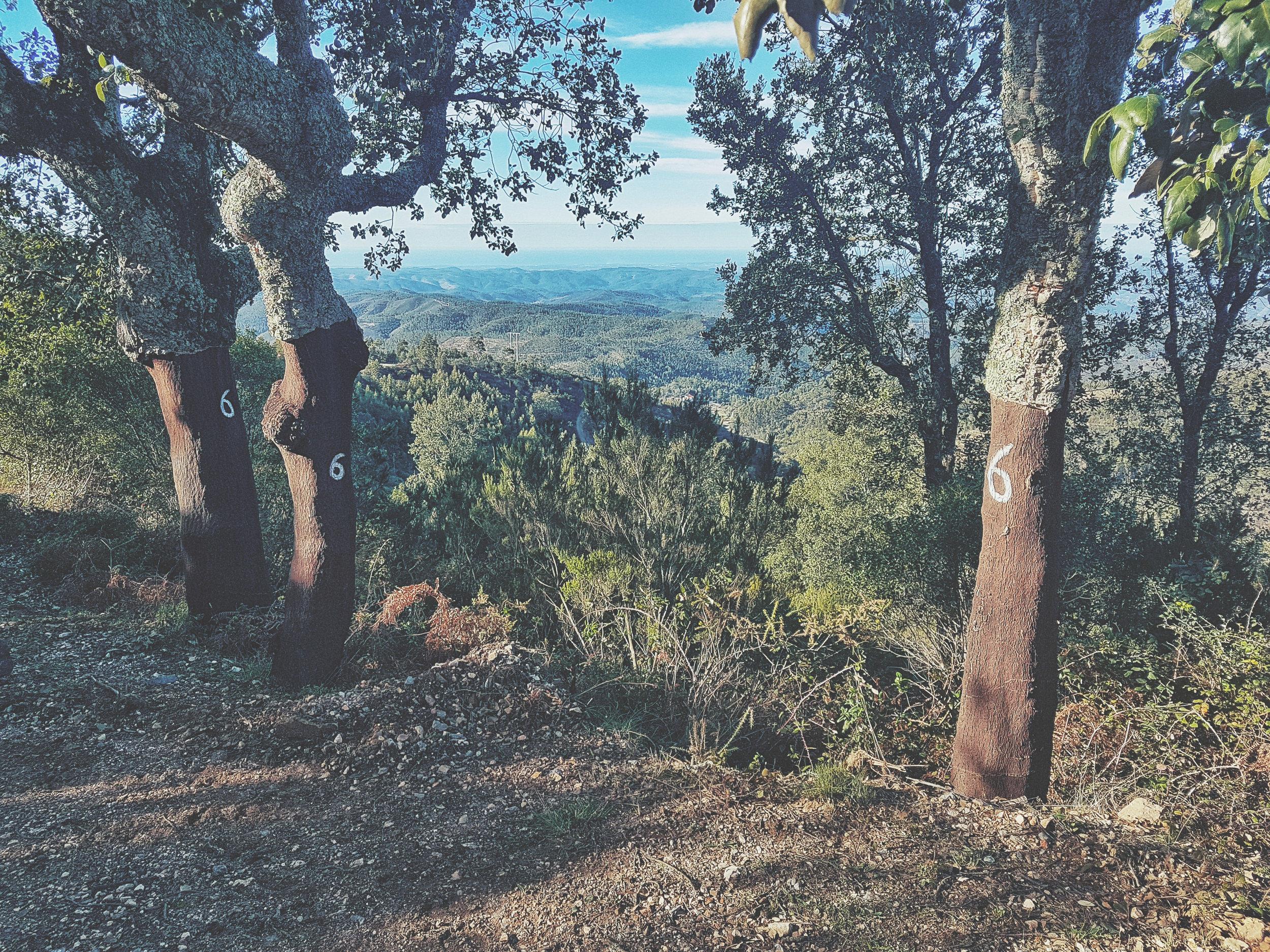 barbelote waterfall monchique portugal. hiking trail. walking trail. evil trees. lots of trees. cork trees..jpg