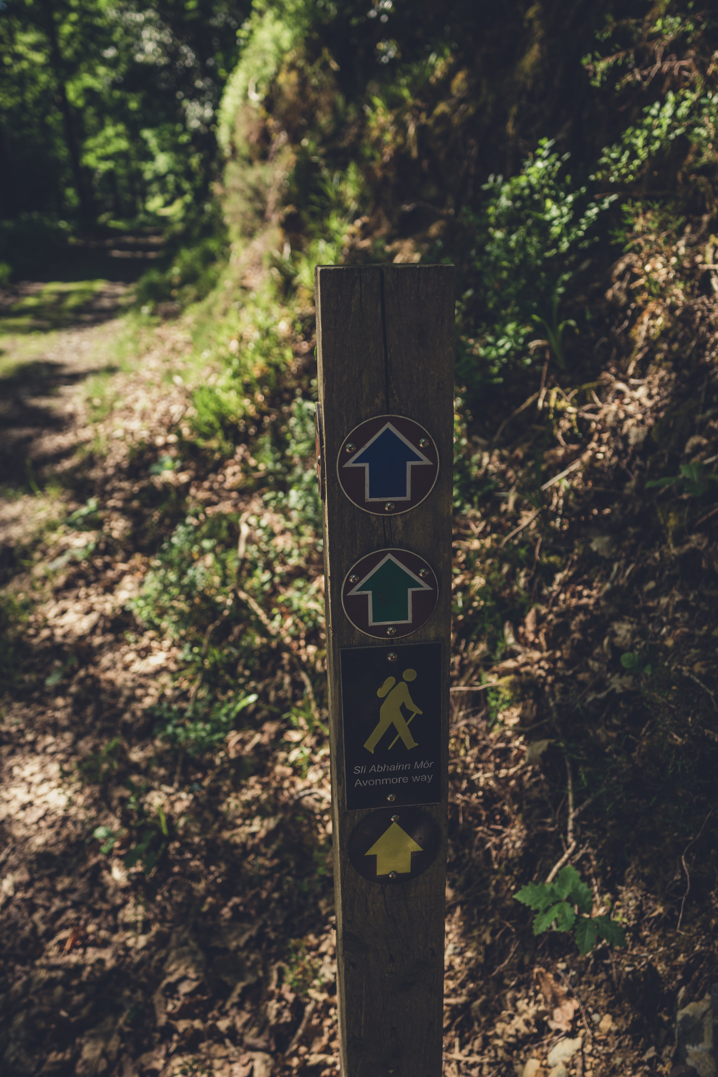 Vale of Clara. Walking in Wicklow. The garden of Ireland. Wicklow. Clara Vale. Ferns. Ireland. trees. photography. sunlight. trail markers. green. blue..jpg