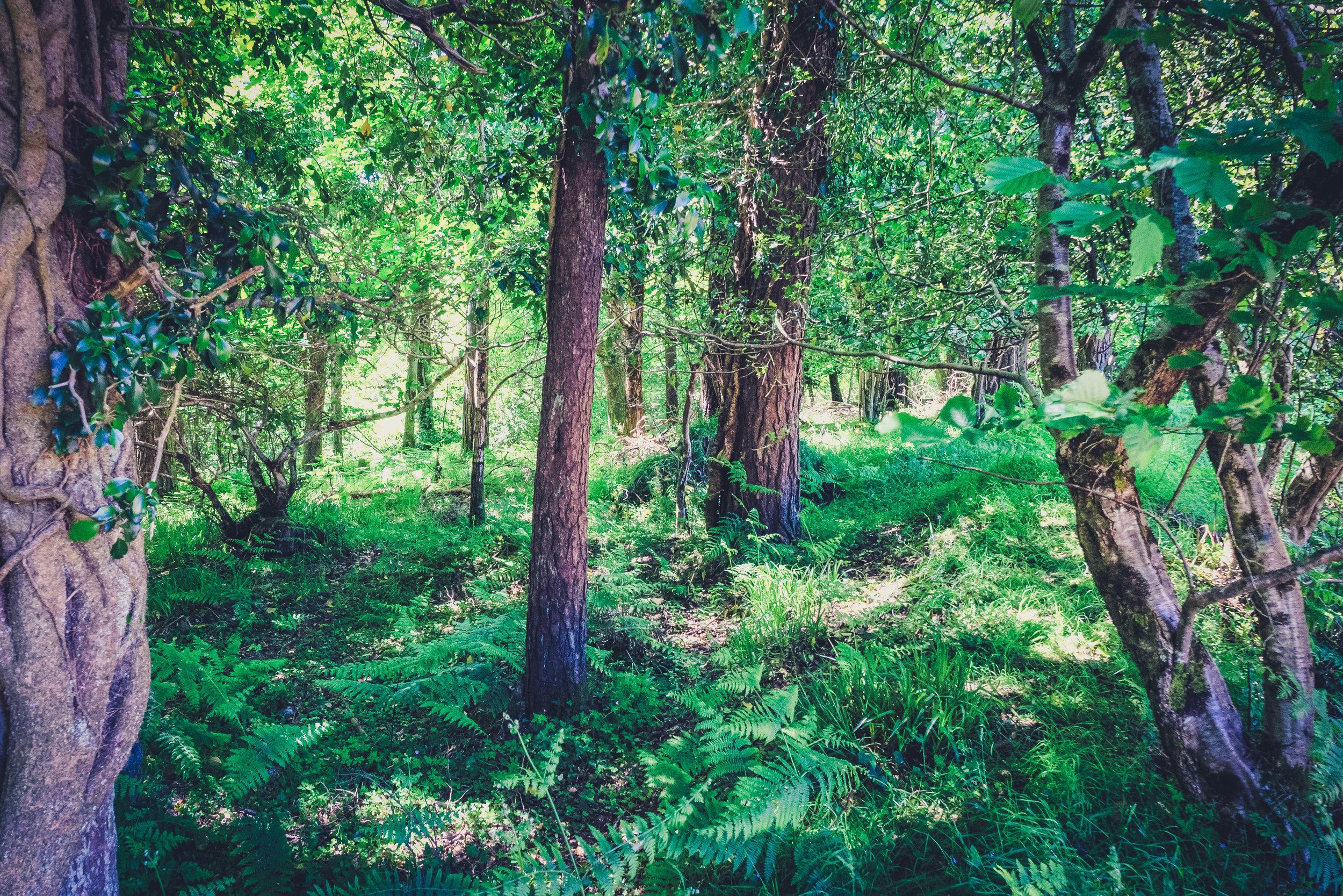 Vale of Clara. Walking in Wicklow. The garden of Ireland. Wicklow. Clara Vale. Ferns. Ireland. trees. forest..jpg
