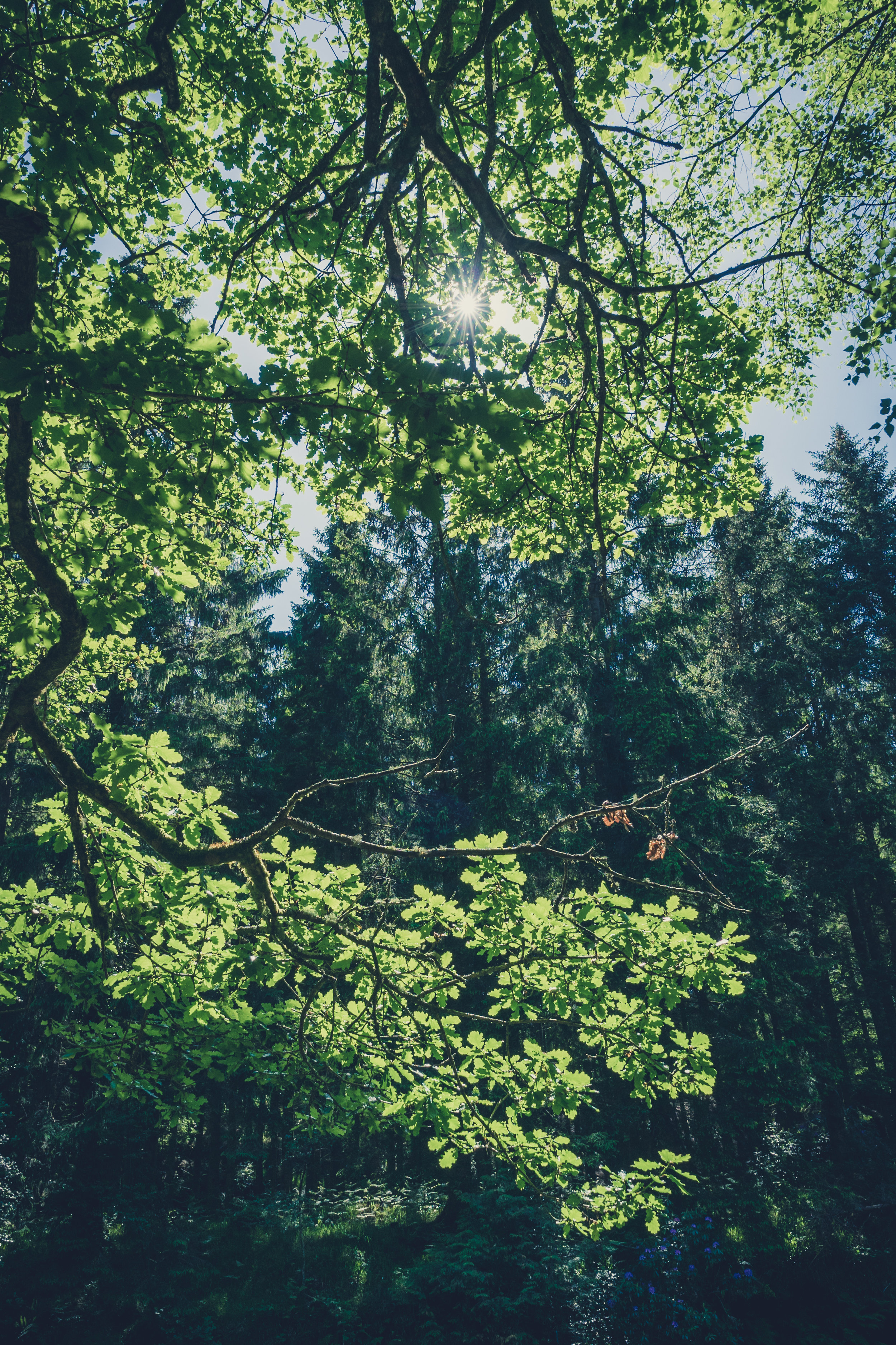 Vale of Clara. Walking in Wicklow. The garden of Ireland. Wicklow. Clara Vale. Ferns. Ireland. trees. photography. sunlight.jpg