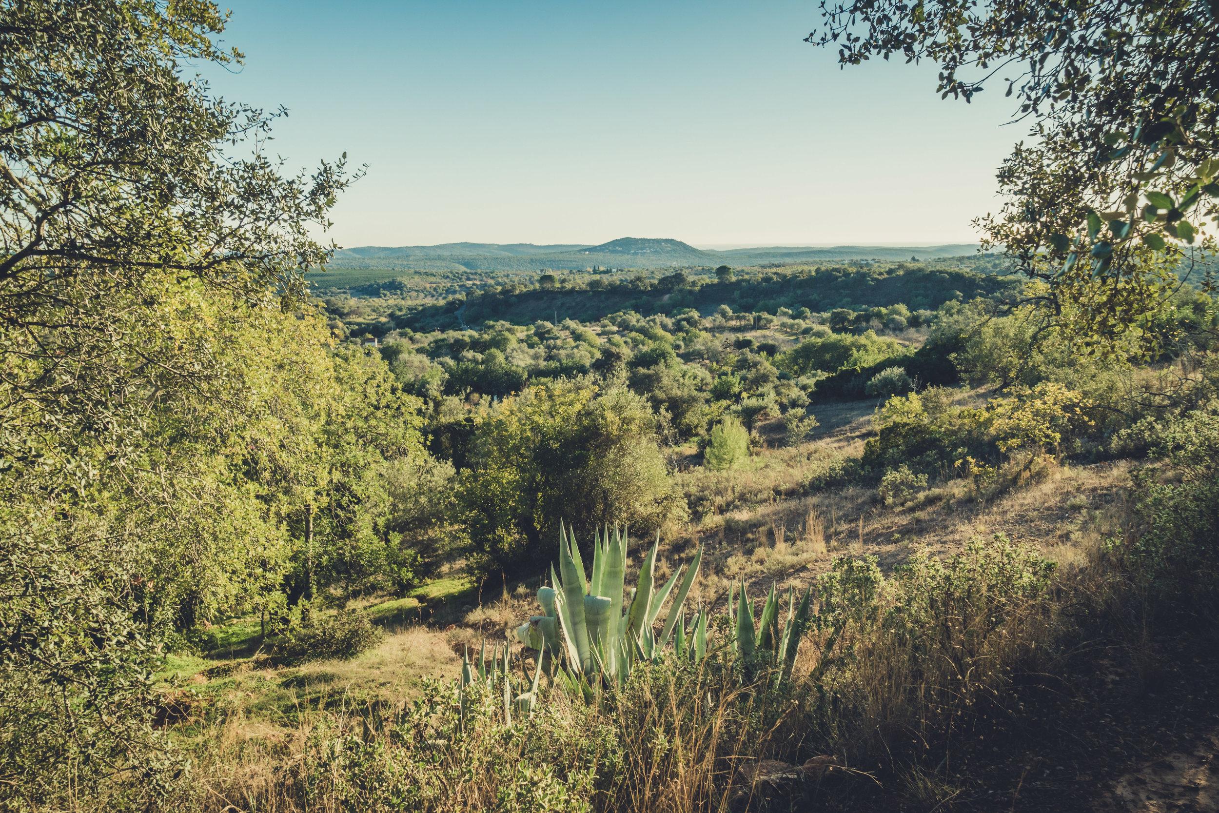 Hiking. algarve. portugal. talbe mountain. walking in the mountains. Rocha da Pena.. tree, view. green. ....jpg