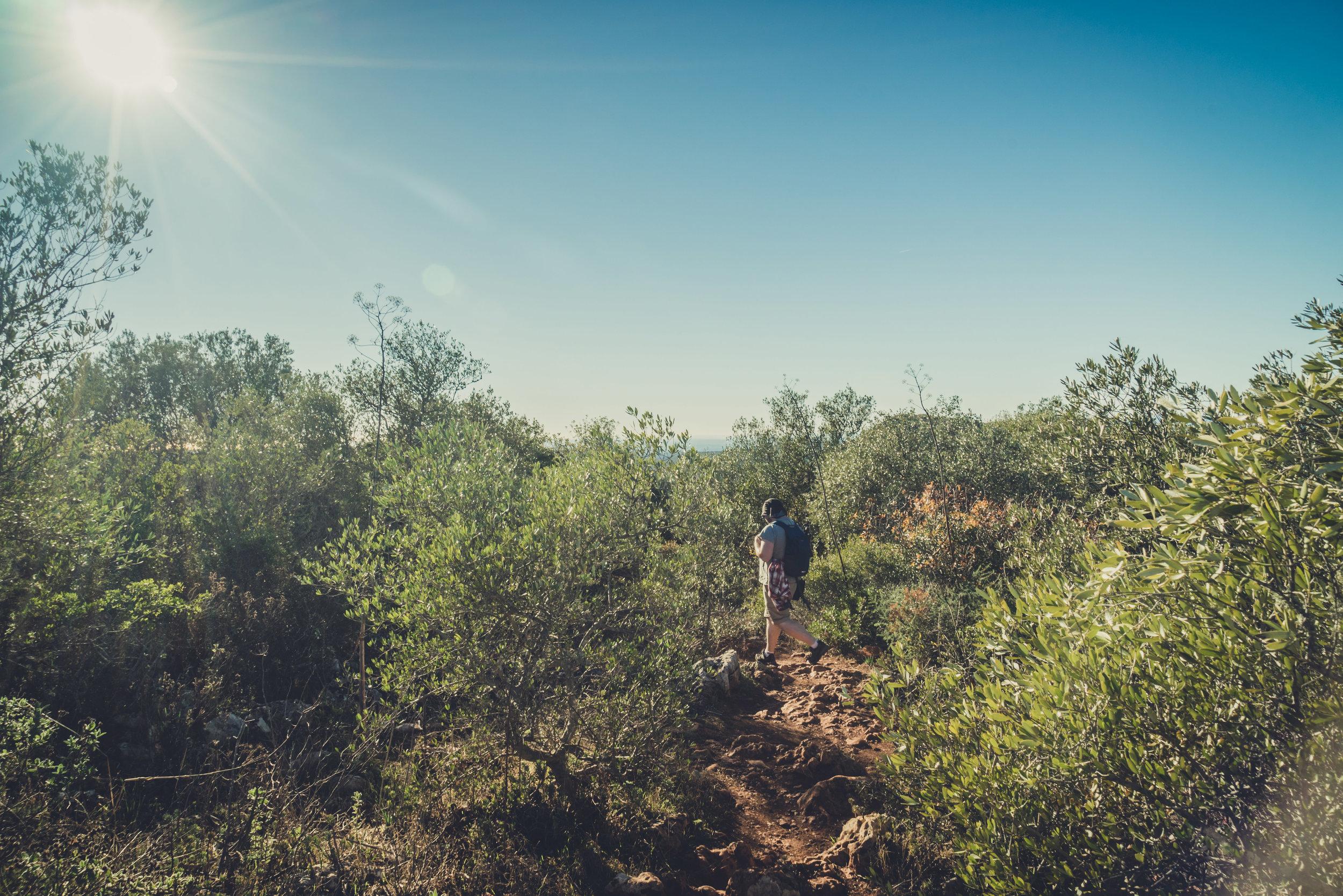 Hiking. algarve. portugal. talbe mountain. walking in the mountains. Rocha da Pena.. tree, view. green. lowepro...jpg