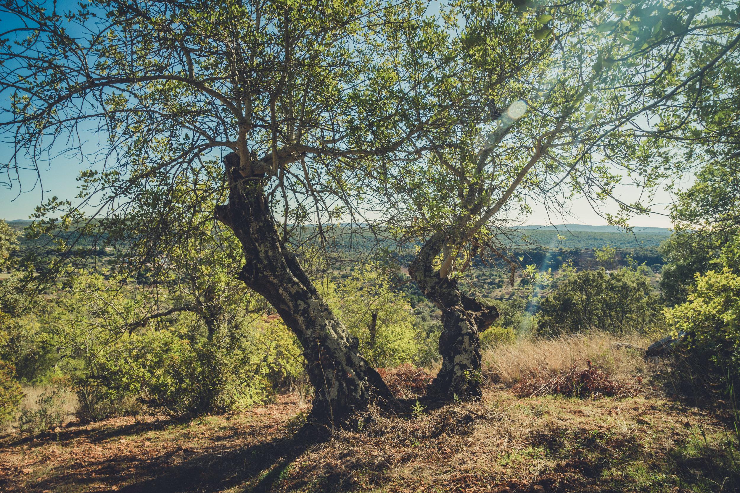 Hiking. algarve. portugal. talbe mountain. walking in the mountains. Rocha da Pena.. tree, view. green.jpg