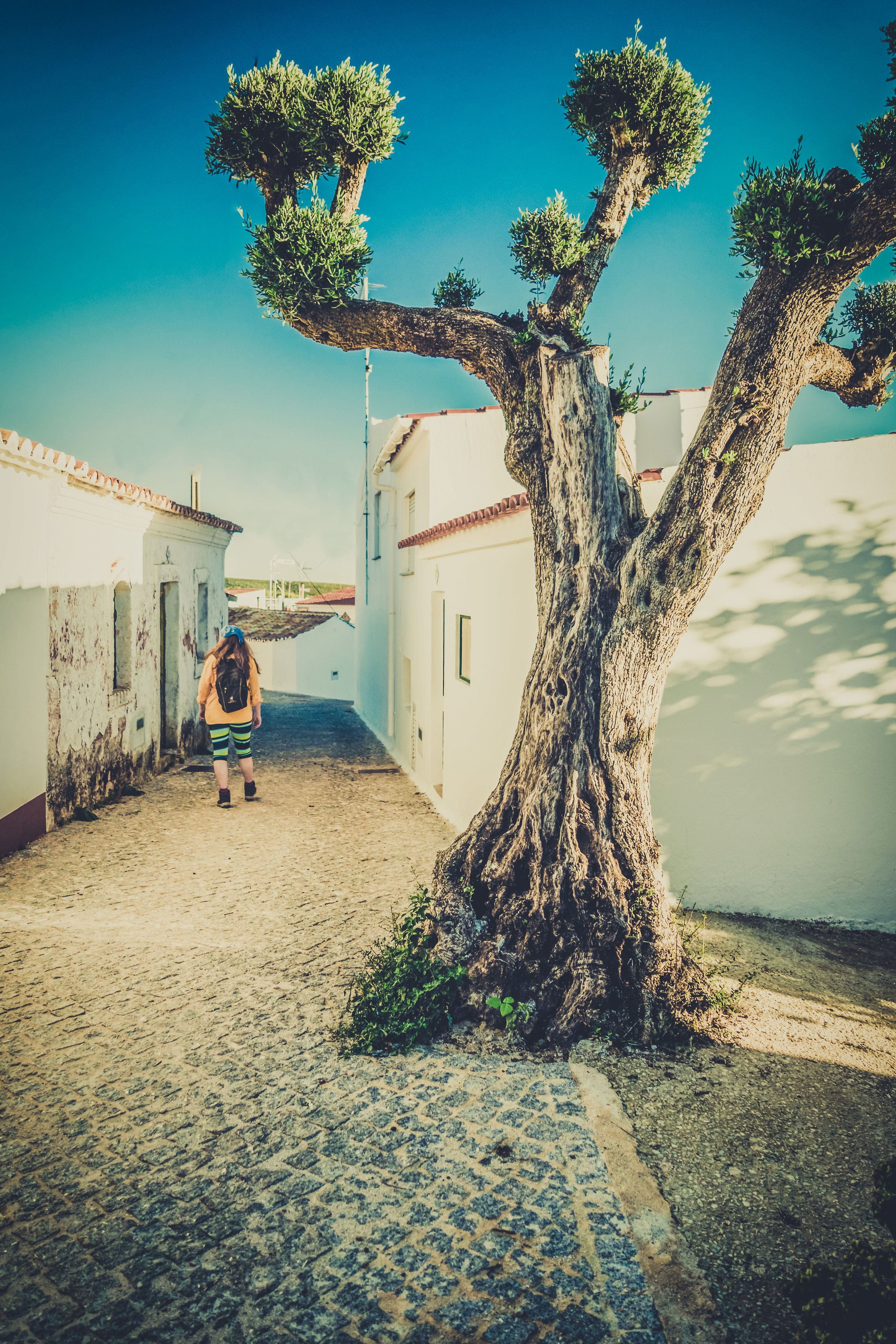 Hiking. algarve. portugal. talbe mountain. walking in the mountains. Rocha da Pena.. tree, view. green. lowepro.. alleyway with tree.jpg