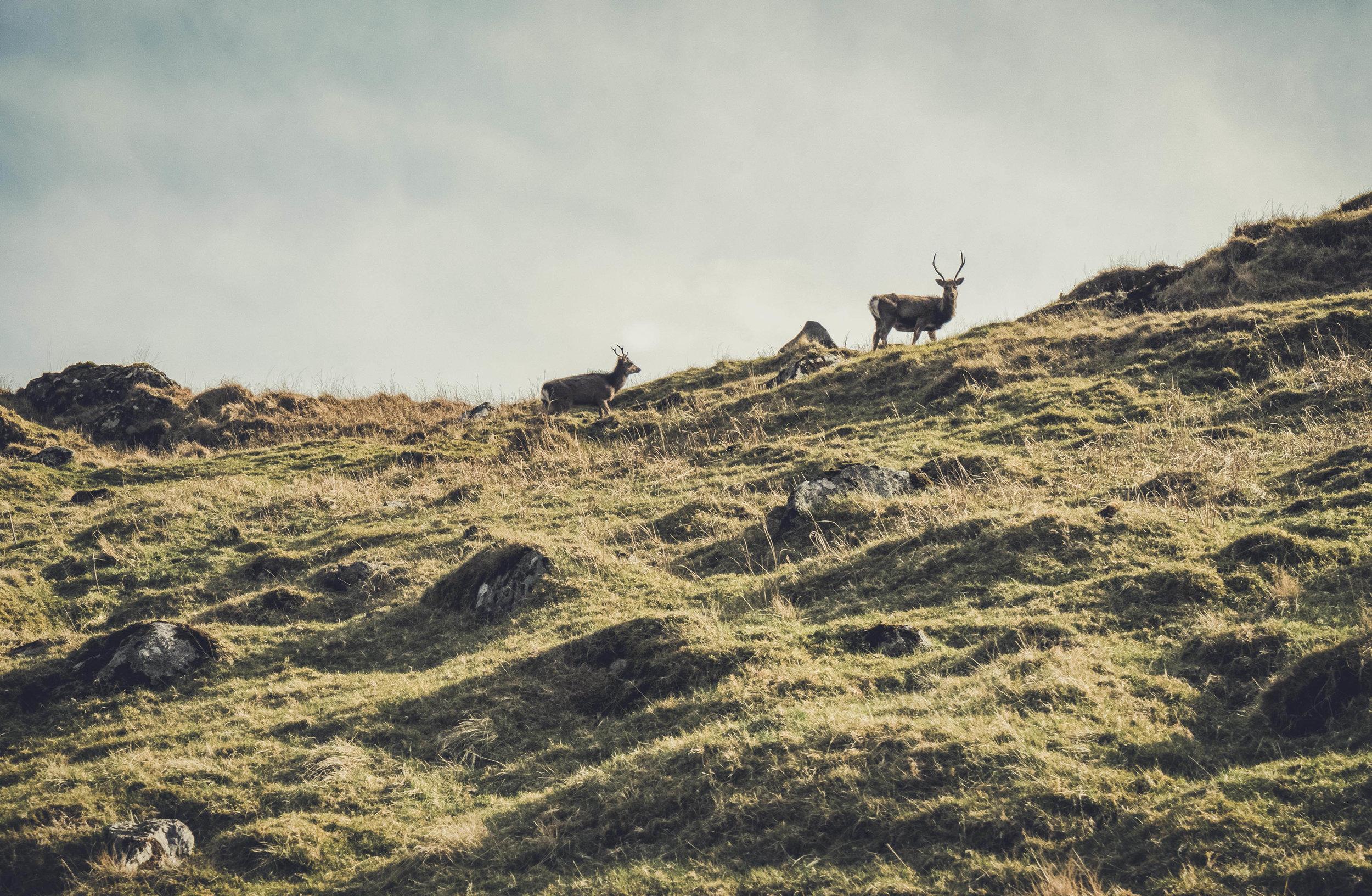 glendalough. irish history. county wicklow. round tower. hill walknig. hiking. grave yard. wildlife. tombstones. lakes. blue sky. dees up on the ridge.jpg