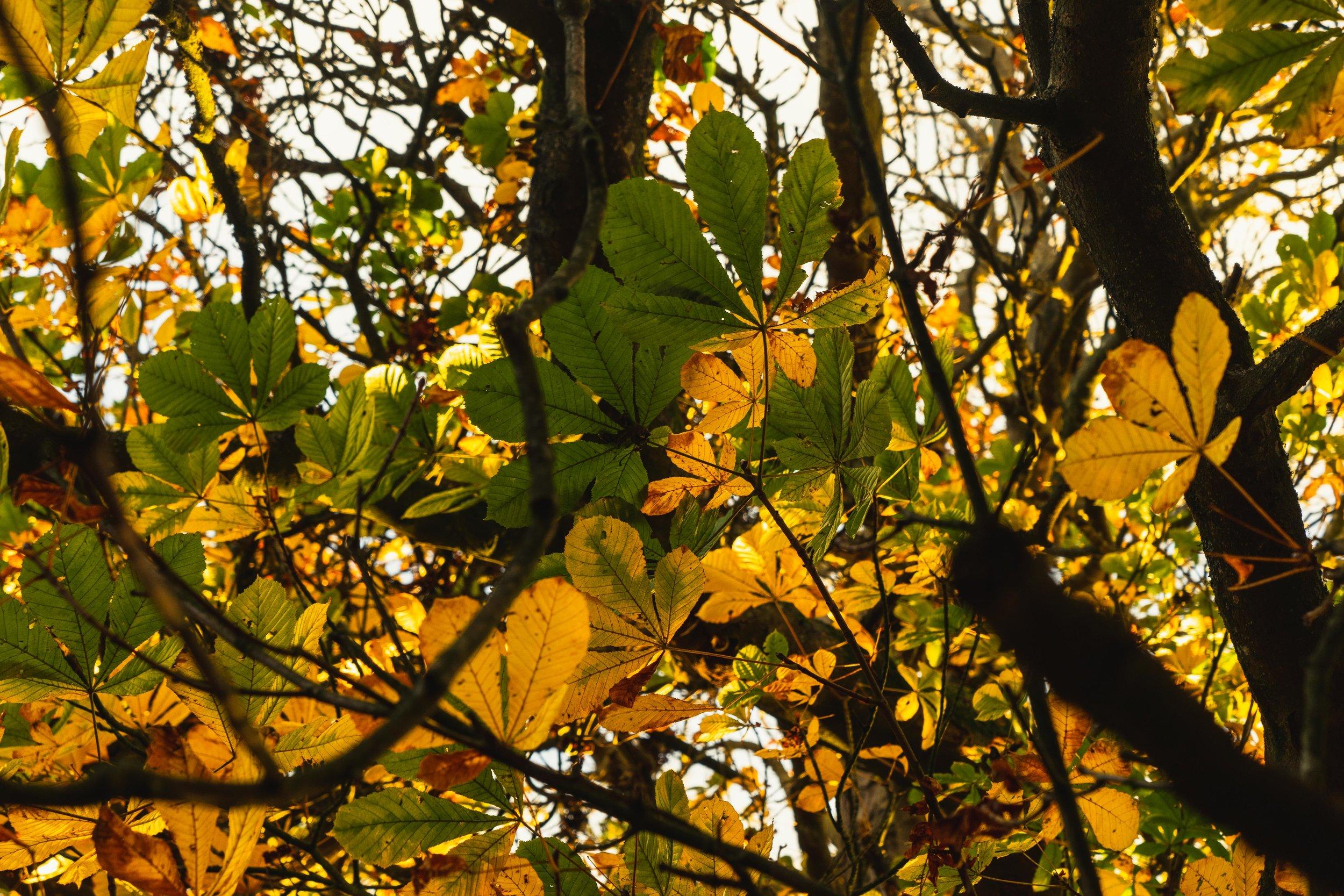 Hill of tara. ireland. history. irish. golden light. travel. blog. autumn. colour. celtic. gaelic. changing of the season.jpg