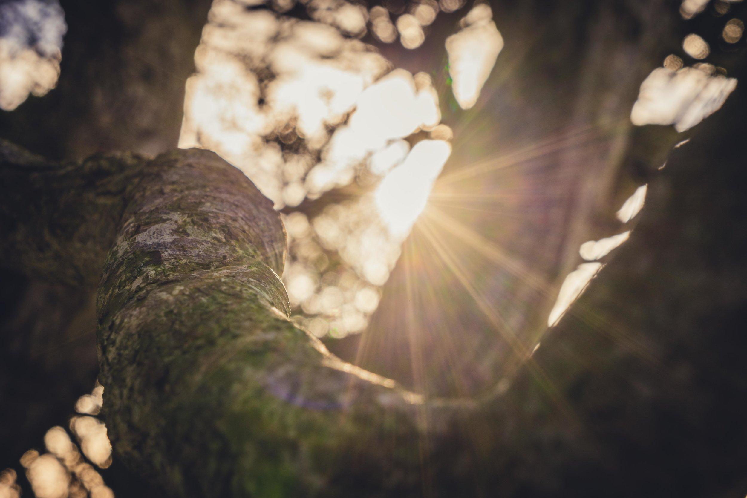 Hill of tara. ireland. history. irish. golden light. travel. blog. autumn. colour. celtic. gaelic. sunlight through the branches.jpg