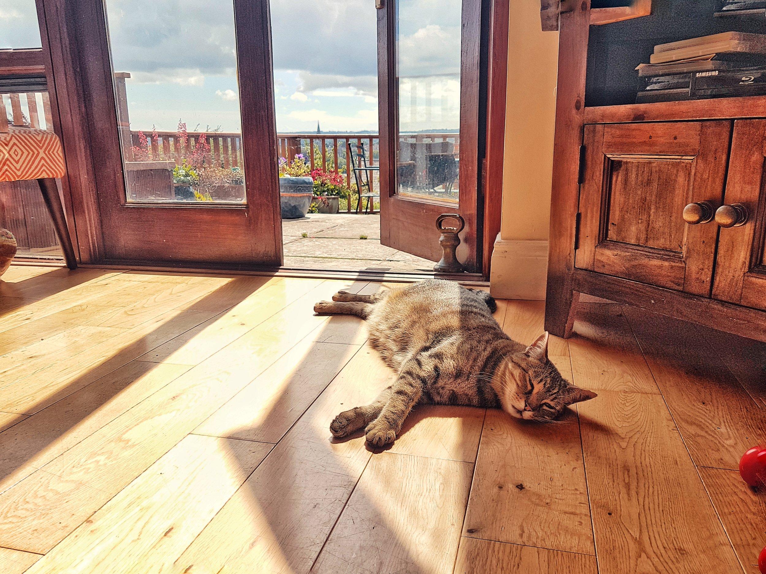 county cork. cork. ireland. irish. history. city. house sitting. old. travel. travel photography. travel photographer.  cat bathing in the sunlight.jpg