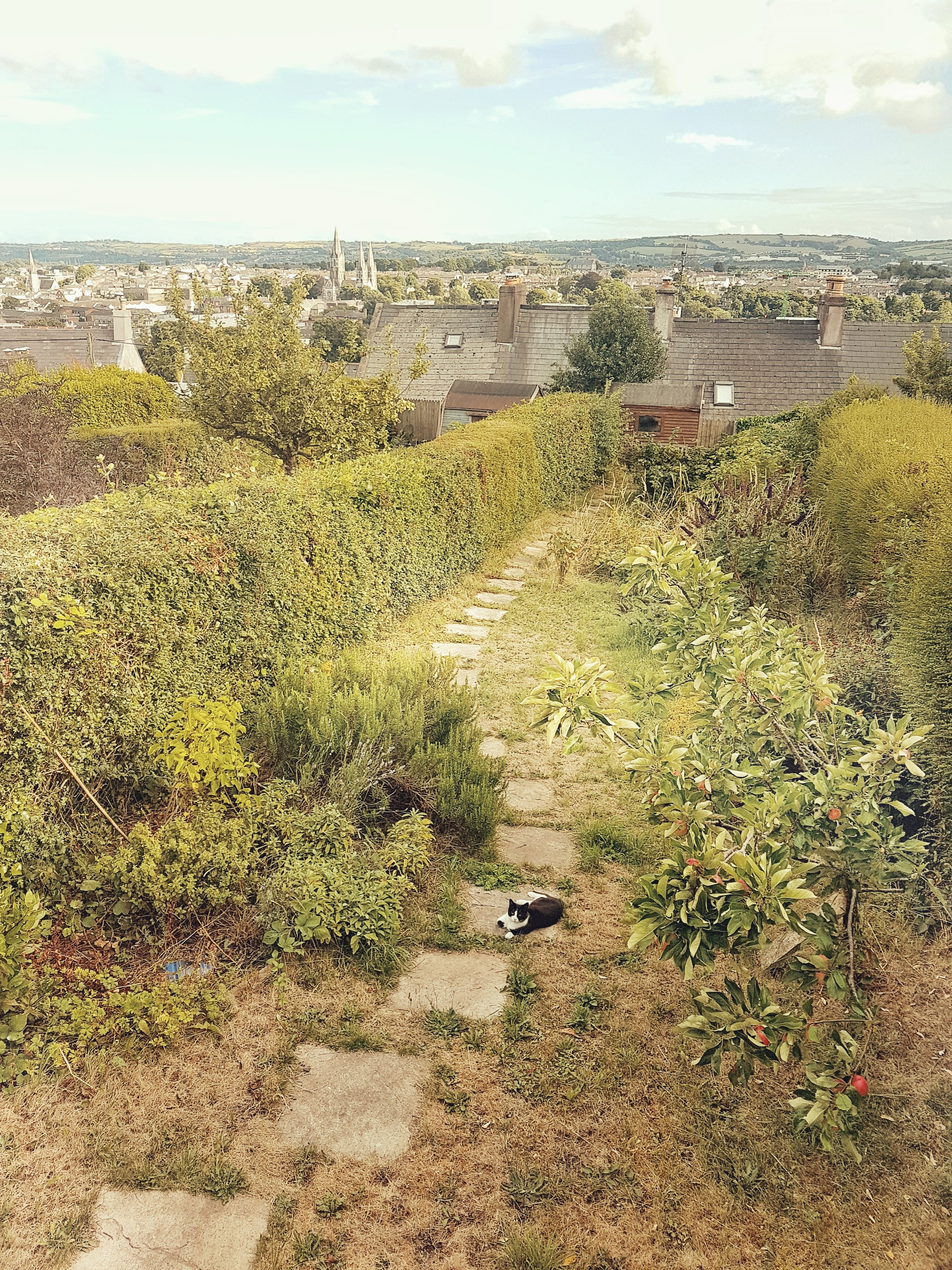 county cork. cork. ireland. irish. history. city. house sitting. old. travel. travel photography. travel photographer.  cat sitting in the garden.jpg