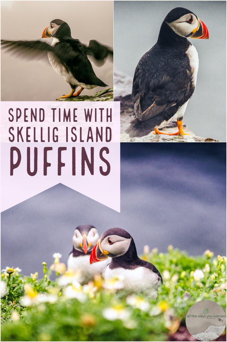 Hang out with the Puffins on Skellig Islands  #nature  #naturephotography  #wildlife #ocean #birds #travel #birdwatching #photographytips #island #starwars #photography #rain #ireland #boat #sunset #camera.jpg
