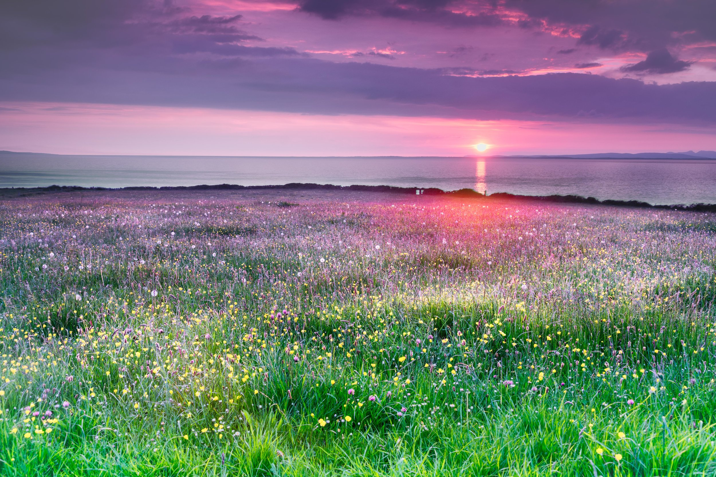 #Spring is the best time to see #wildflowers bloom in the Burren #Ireland | all the ways you wander | #nature #travel