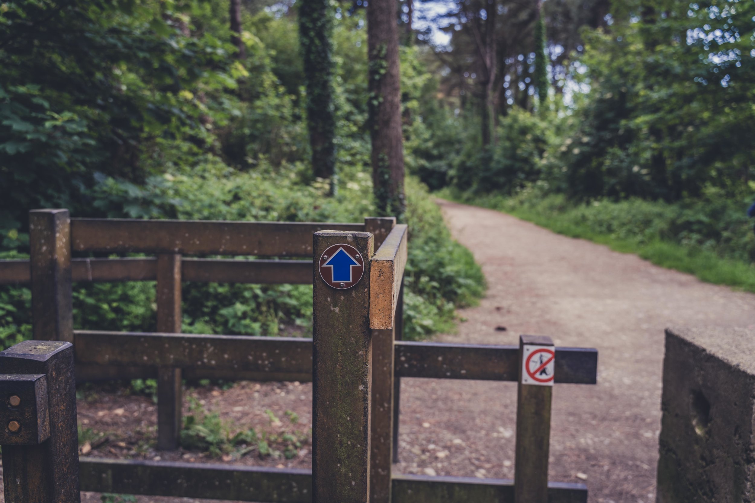 The Raven forest and beach wexford ireland walking signs.jpg