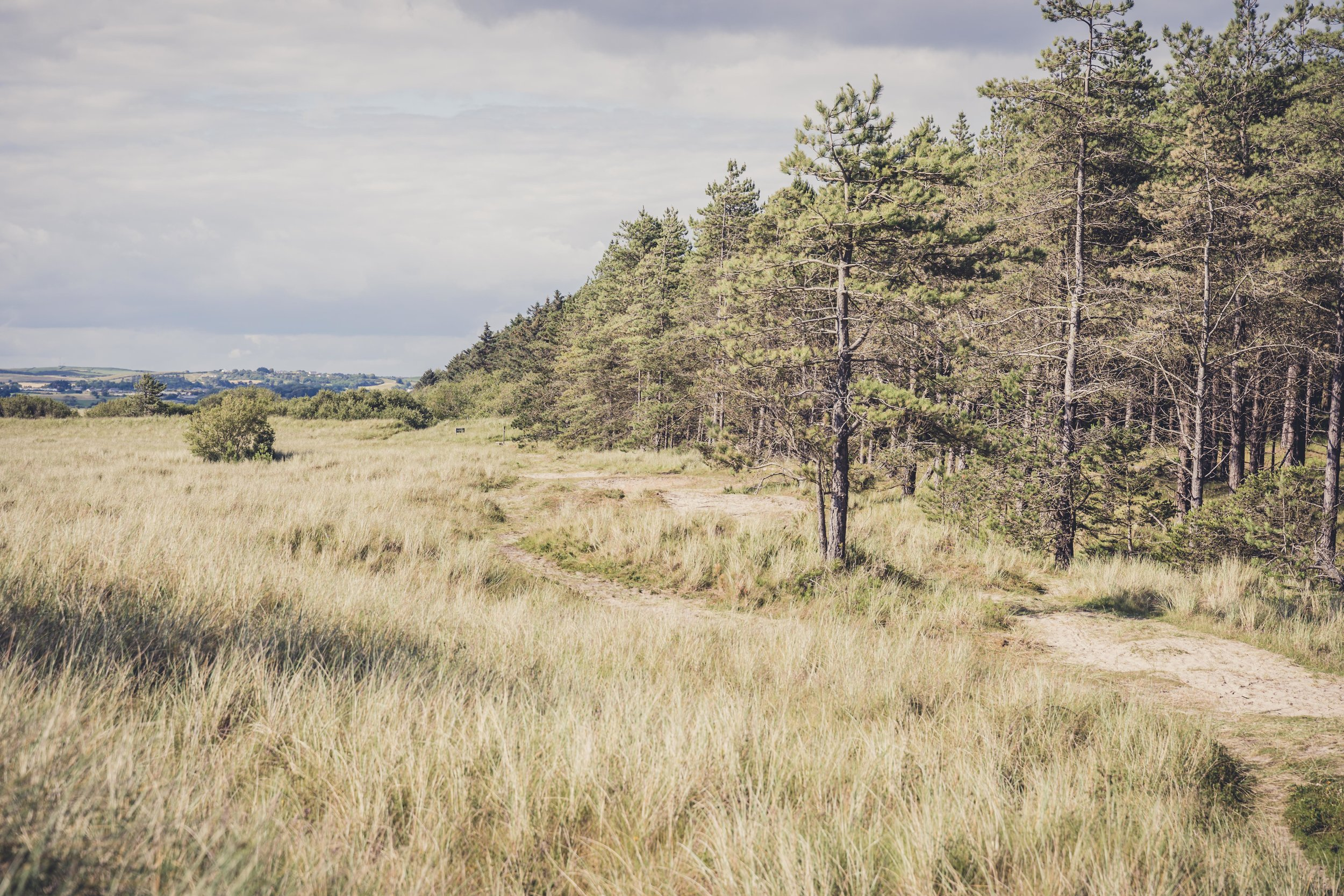 The Raven forest and beach wexford ireland tree line.jpg