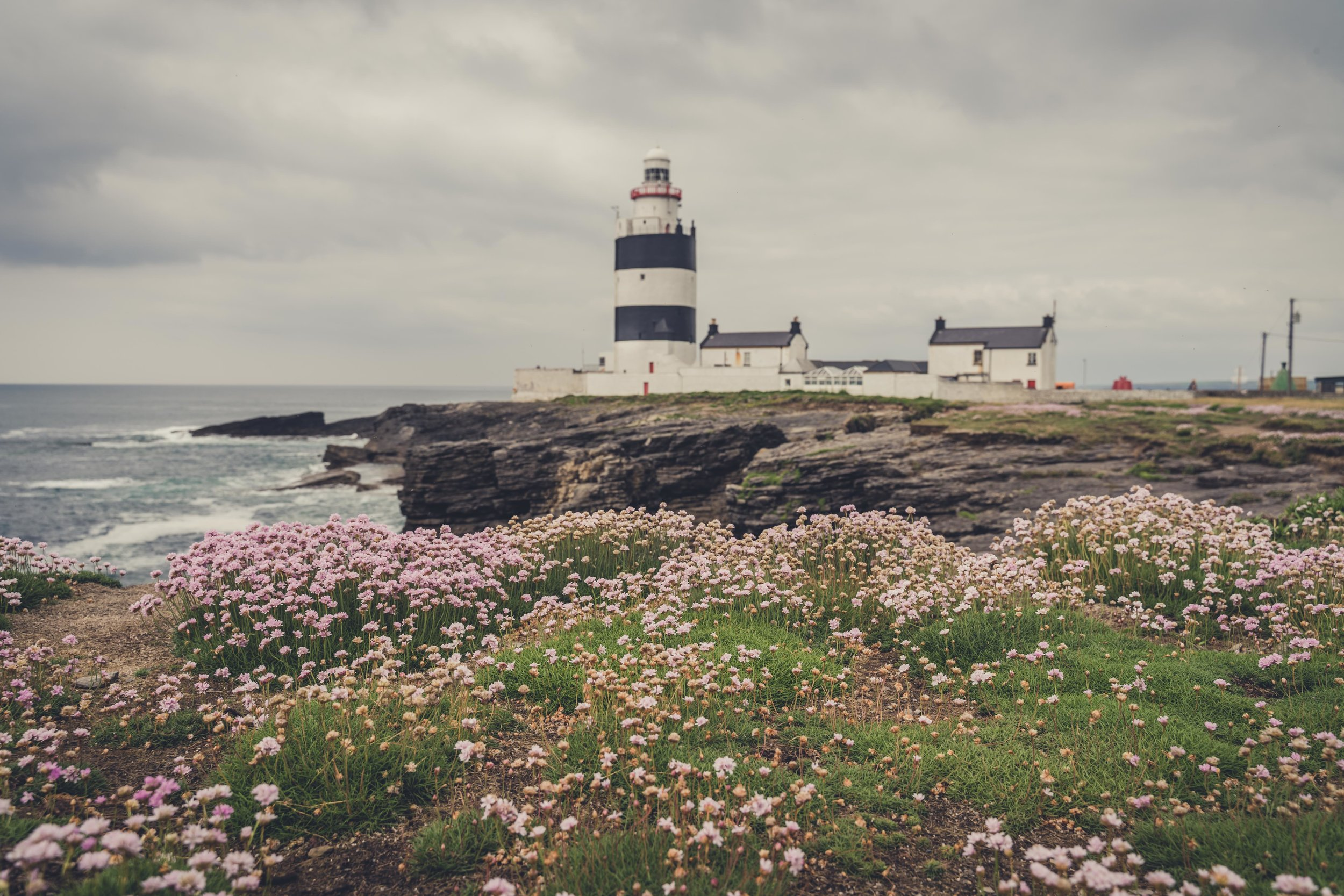 Hookhead Lighthouse wexford ireland flowers.jpg