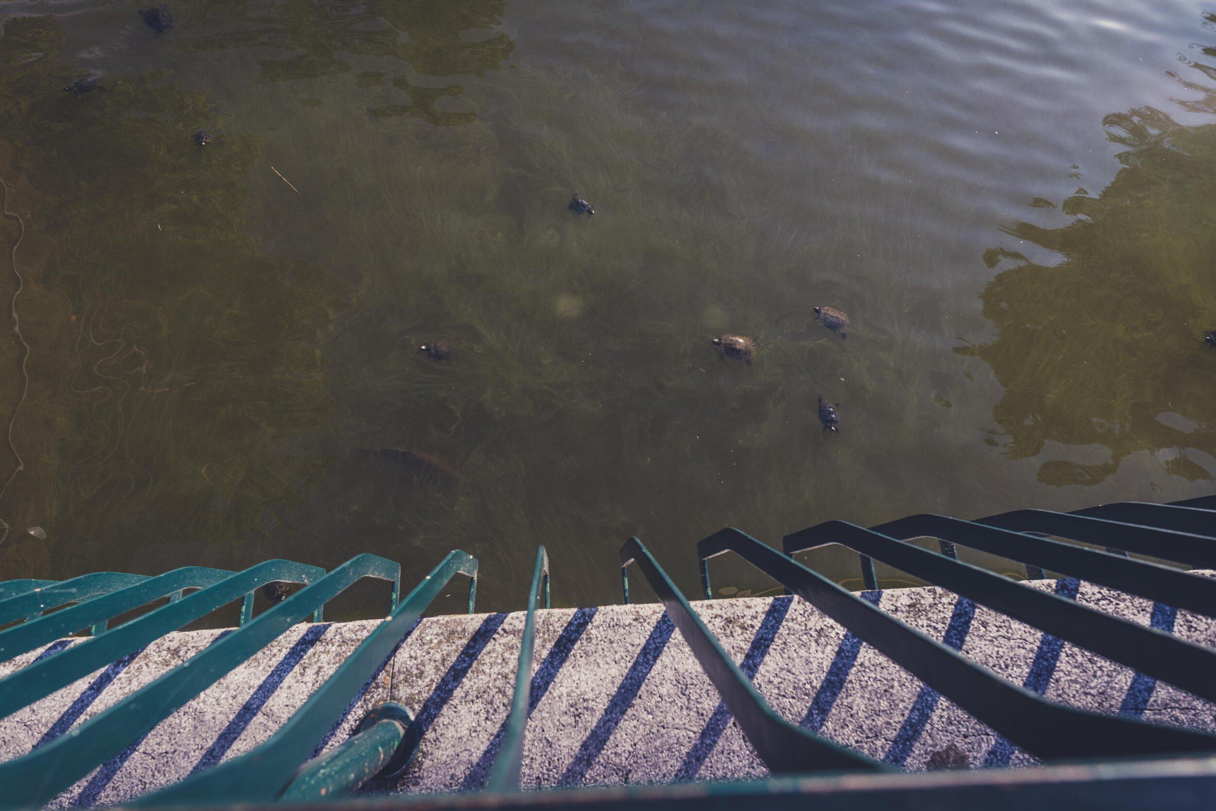 small turtles Giardini Margherita .jpg